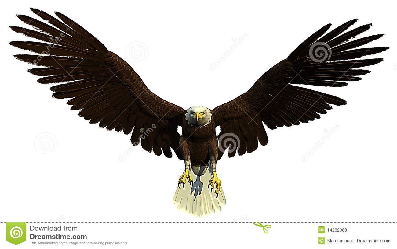 Soaring Eagle Clip Art American bald eagle flying and