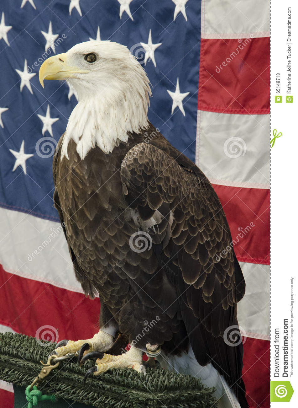 American Bald Eagle In Front Of American Flag Stock Photo Image Of