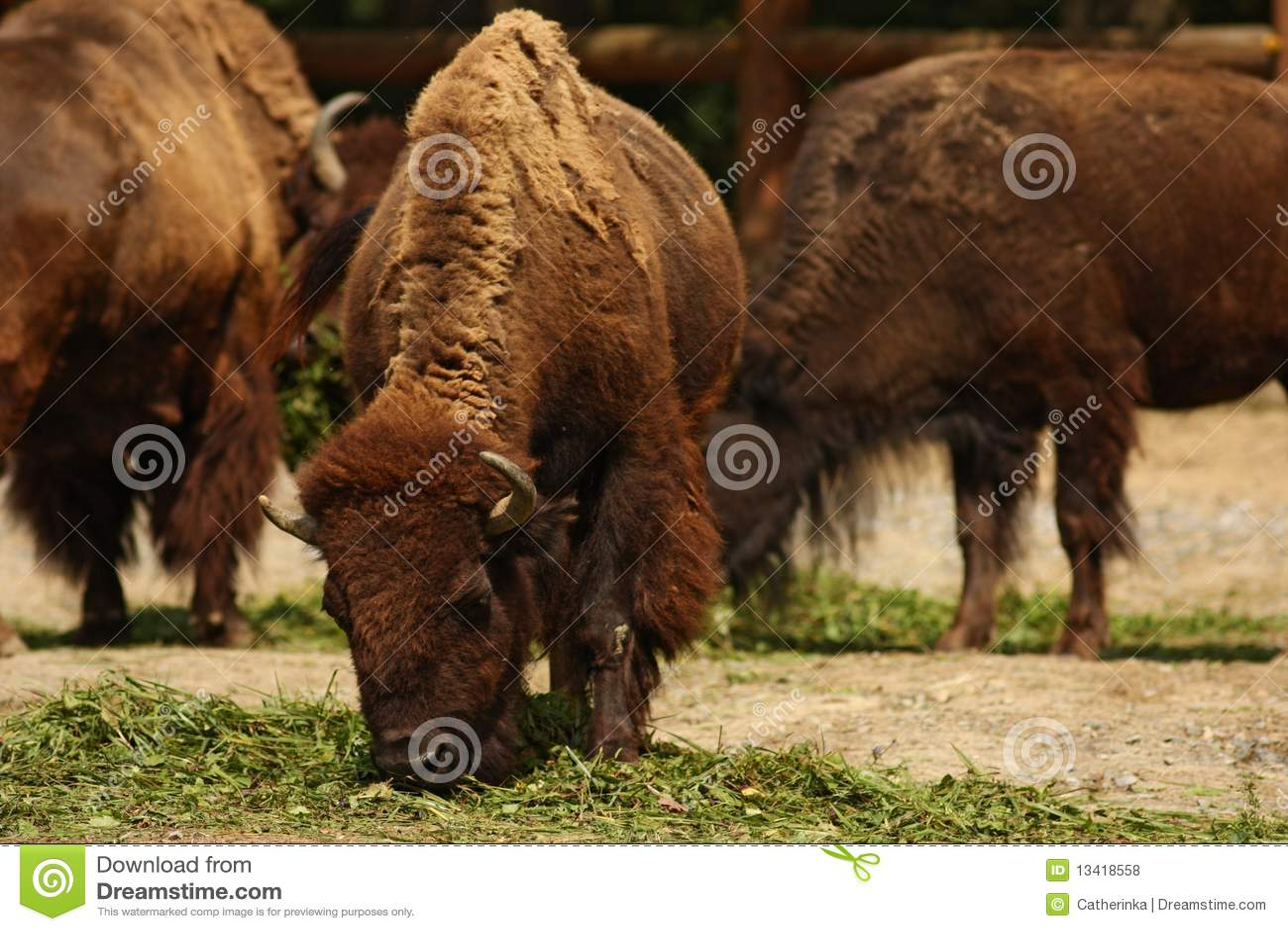 free buffalo stampede no download no reg