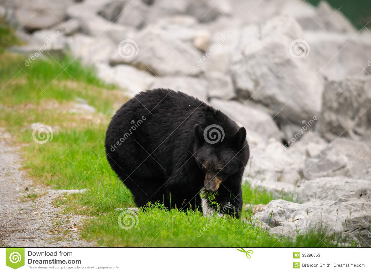 an introduction to the nature of canadian black bear Black bear biology  and space t o meet the black bear's needs black bears primarily inhabit forested areas with a thick  the introduction of exotic.