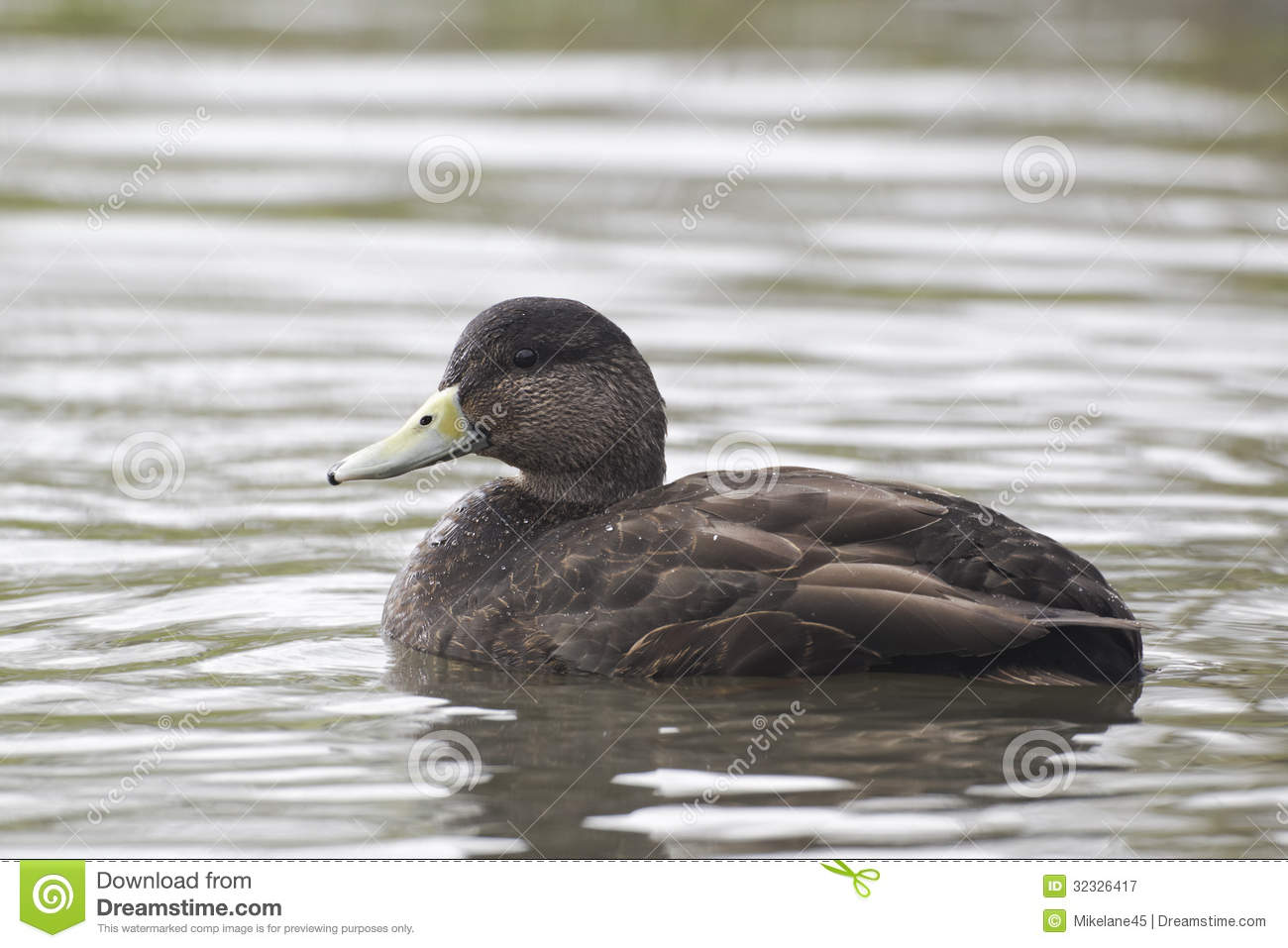 duck divorced singles How did you divorce your ex with kid(s)  find comfort and strength at supportgroups all you need to join is an email,  single dads  single moms  single .