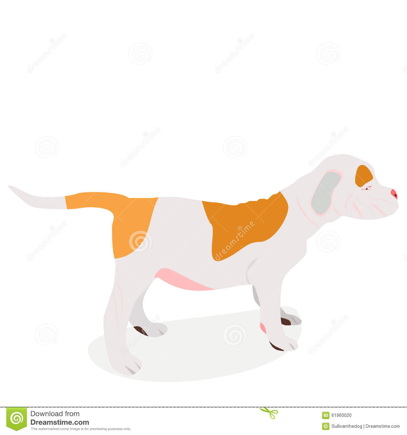 American bulldog vector - photo#14