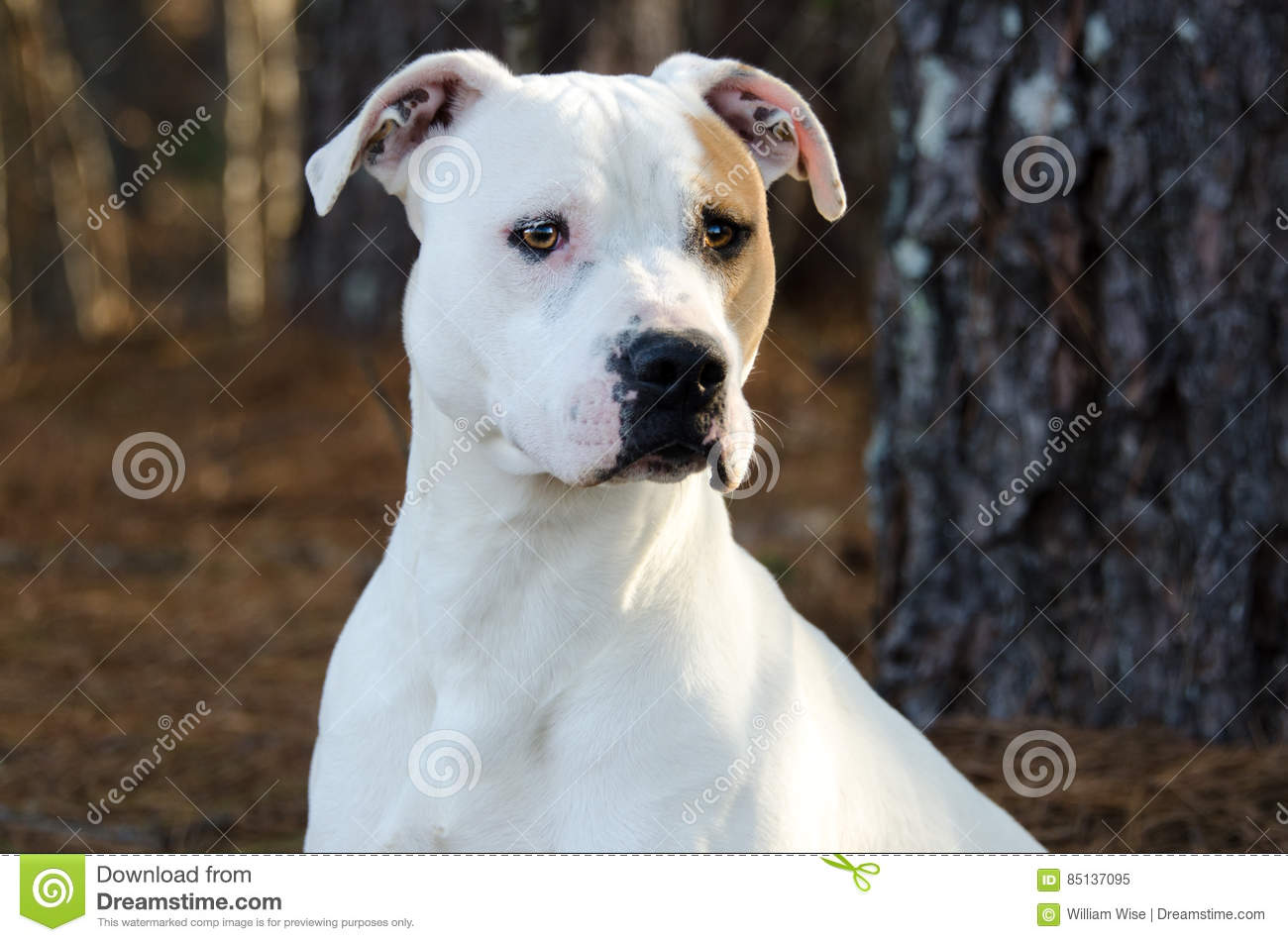 american humane society 20 matches  humane society for tacoma and pierce county dog  pit bull (american or  english staffordshire bull terrier) ∙ rottweiler ∙ doberman ∙ chow ∙ wolf.