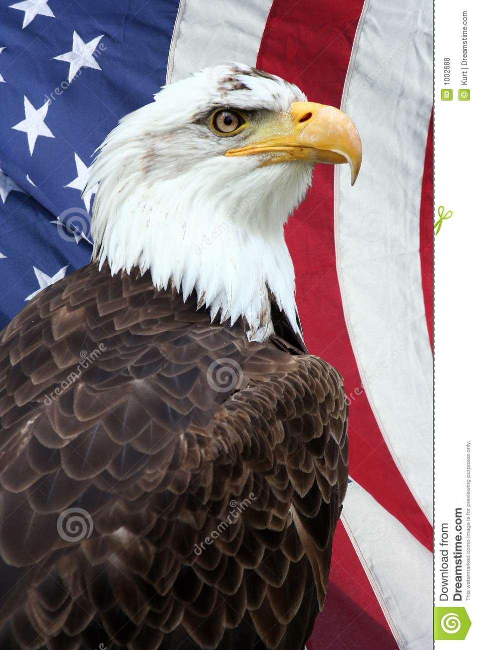 American eagle - Wiktionary