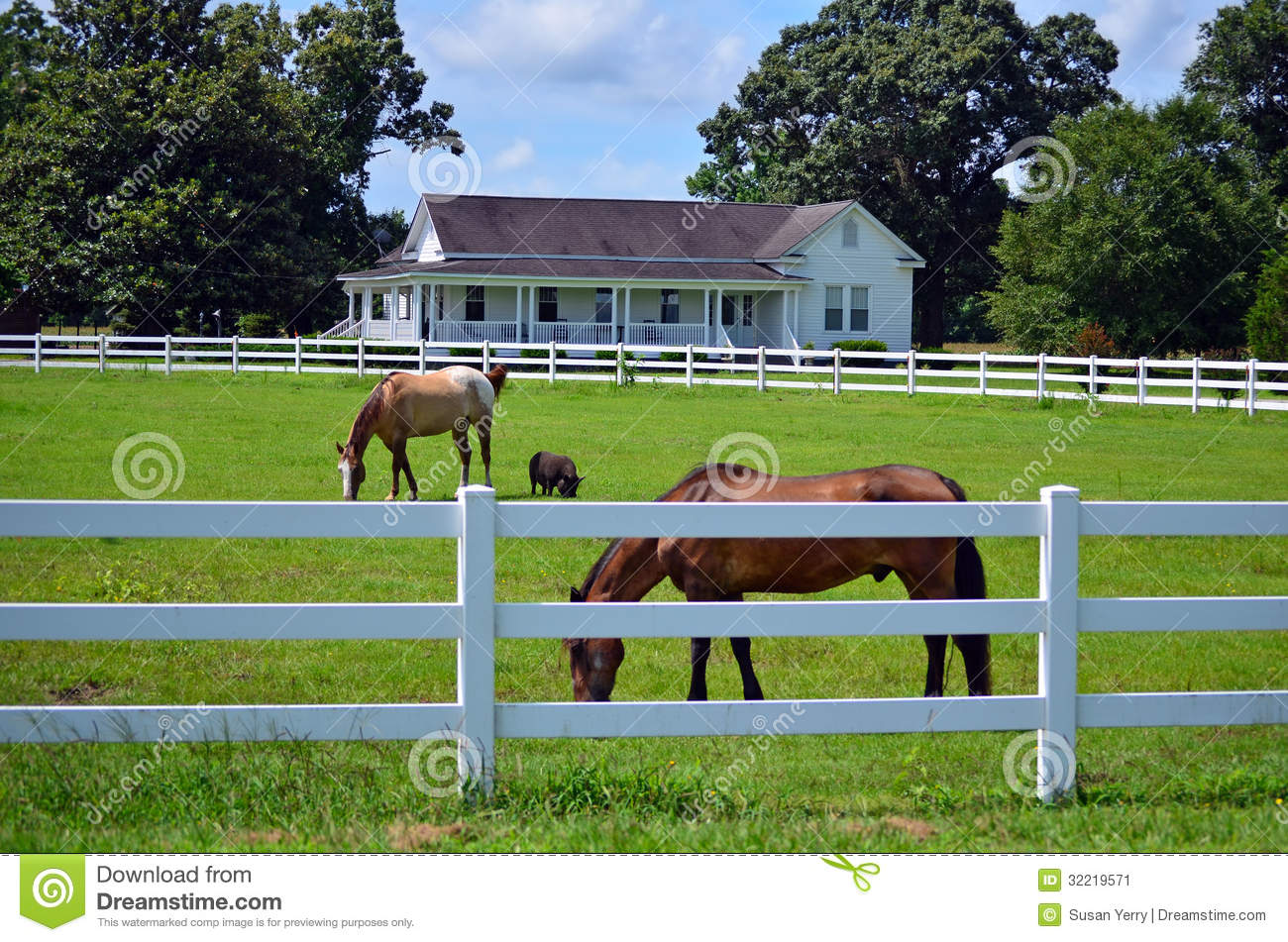 American Farm House Horse Pig Picket Fence Stock Image Image