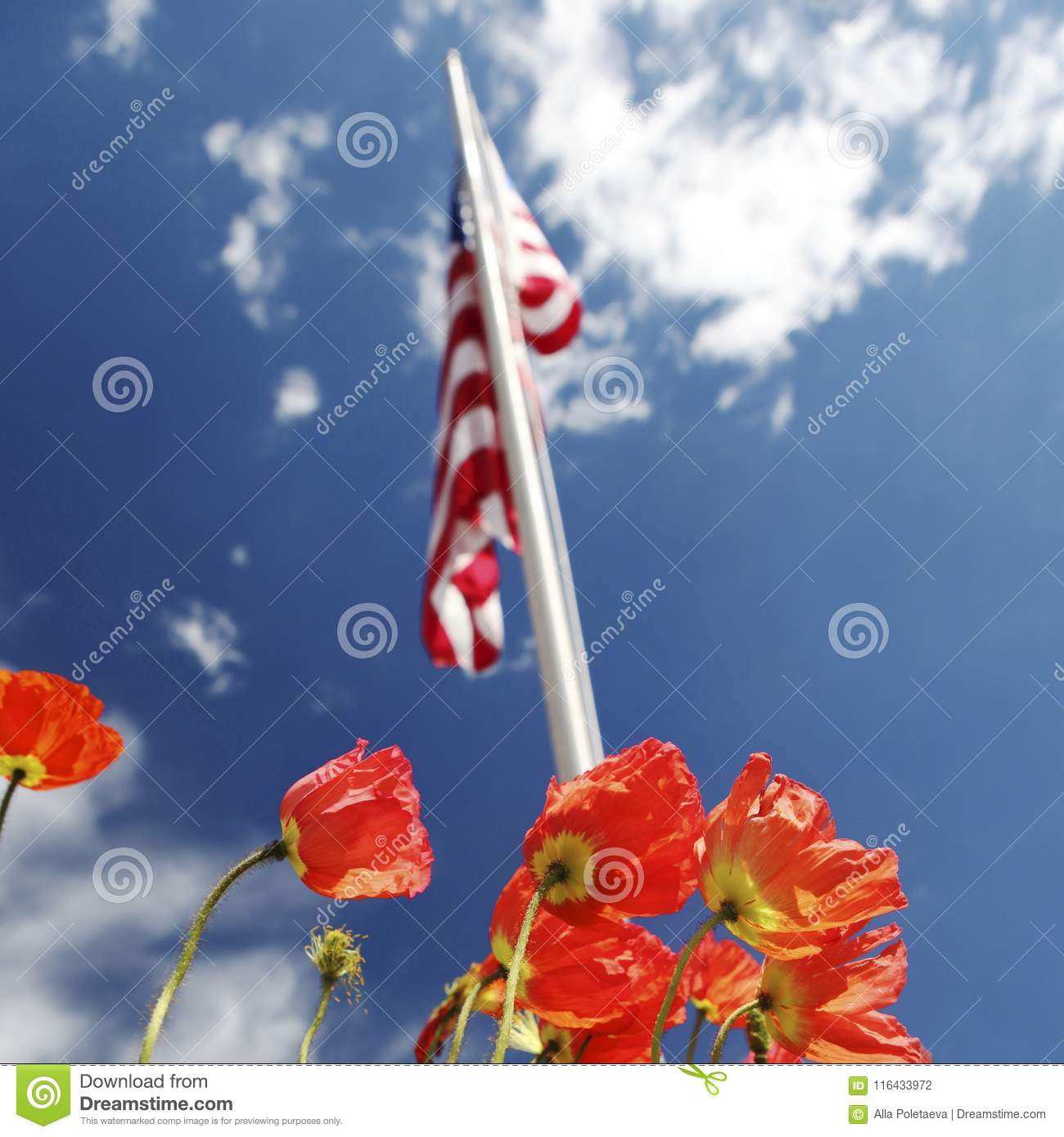 American flag on poppy fields usa memorial day concept stock photo download american flag on poppy fields usa memorial day concept stock photo image of publicscrutiny Gallery