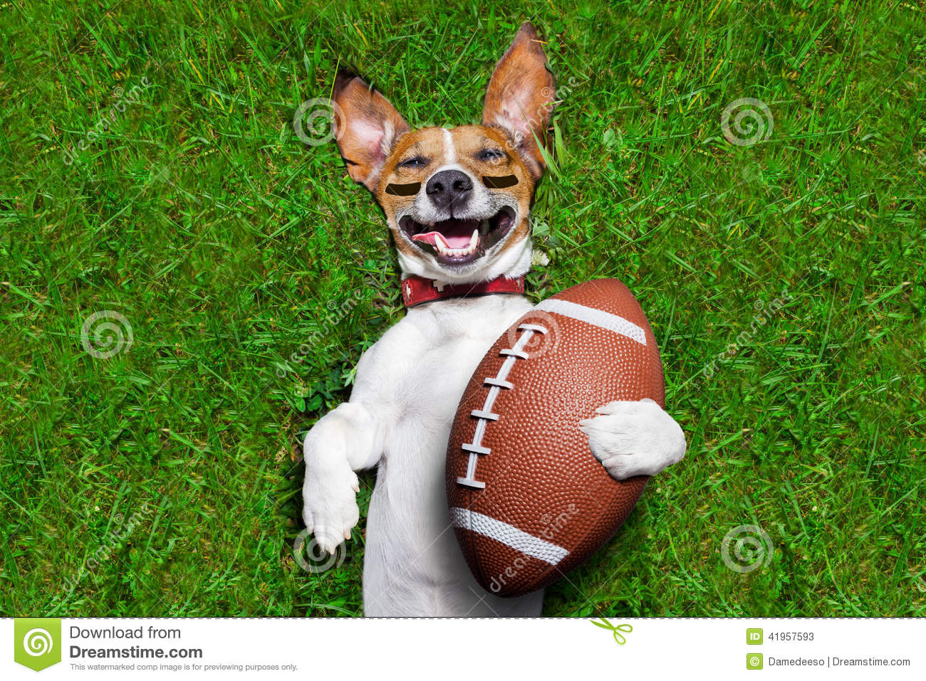 american football dog stock photo image 41957593 rugby ball clipart free rugby union ball clipart
