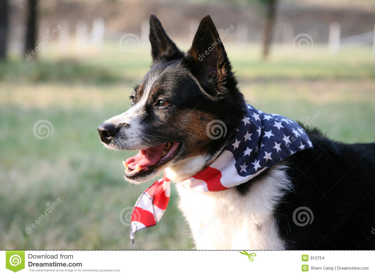 American Pride - Dog With Flag Stock Photo