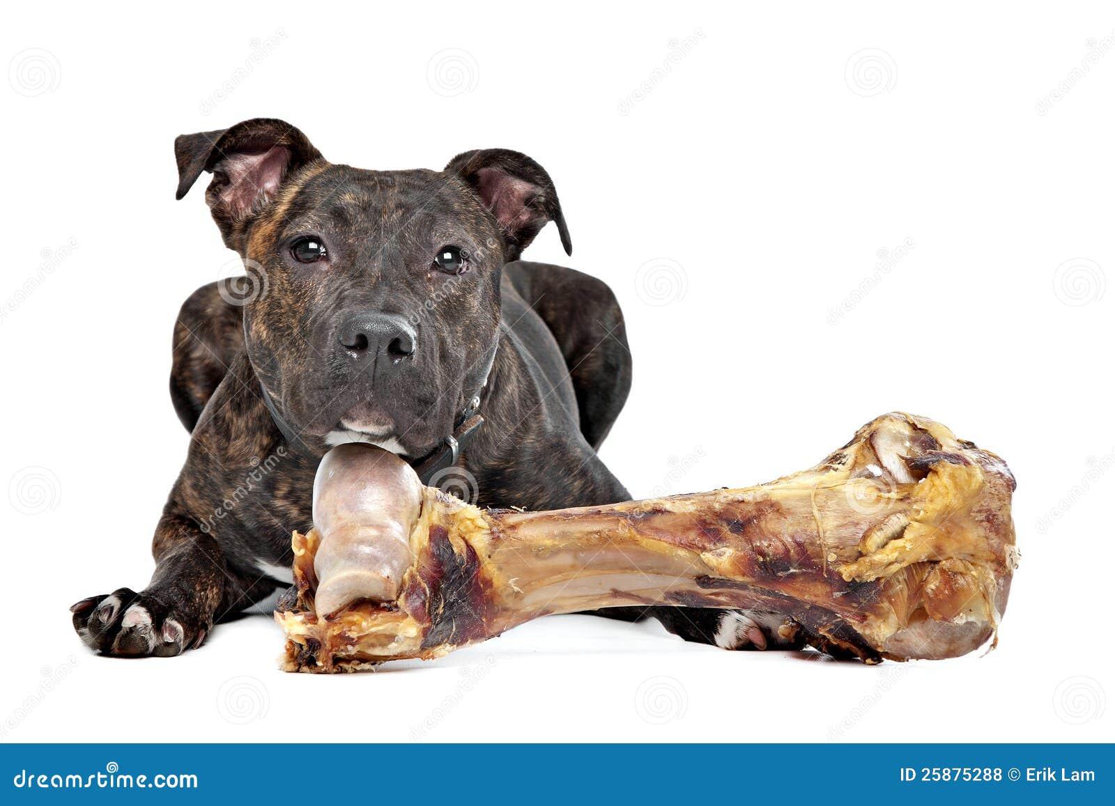 Big bone