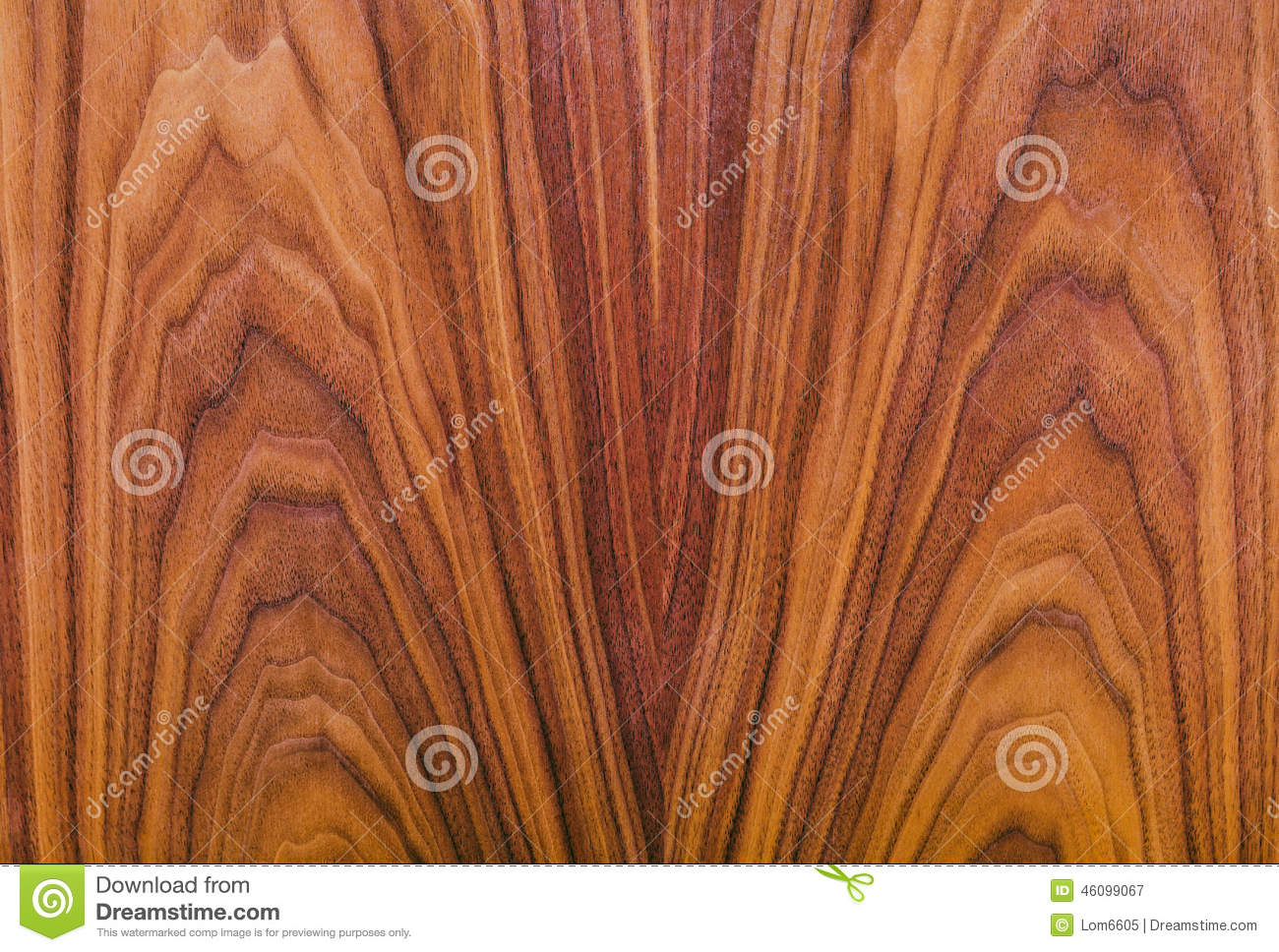 American Walnut Natural Wood Texture Stock Photo - Image ...