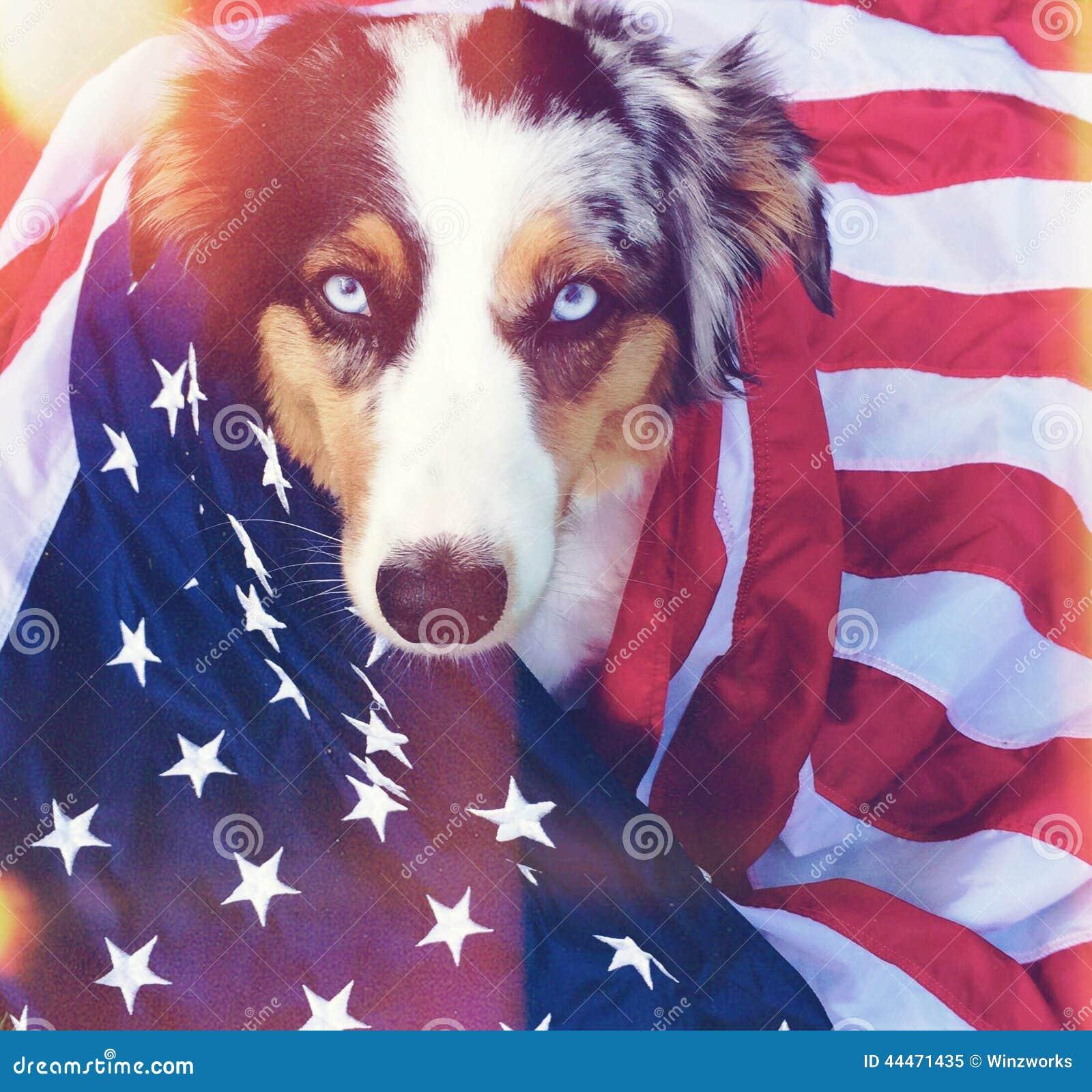 Amerikaanse hond