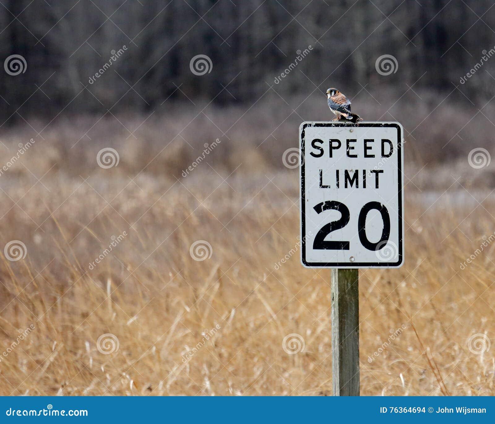Amerikaanse torenvalkzitting op verkeersteken op een gebied