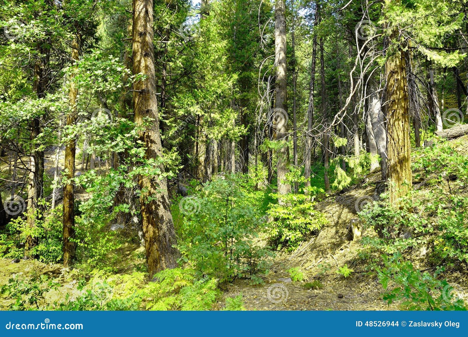 Amerikanischer Wald