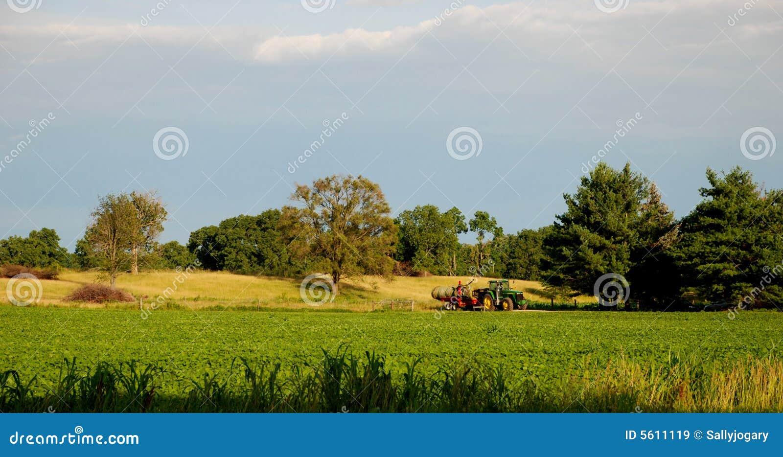 Amerikansk lantgård