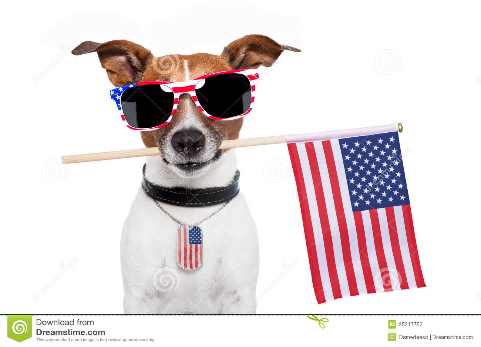Amerykanina pies