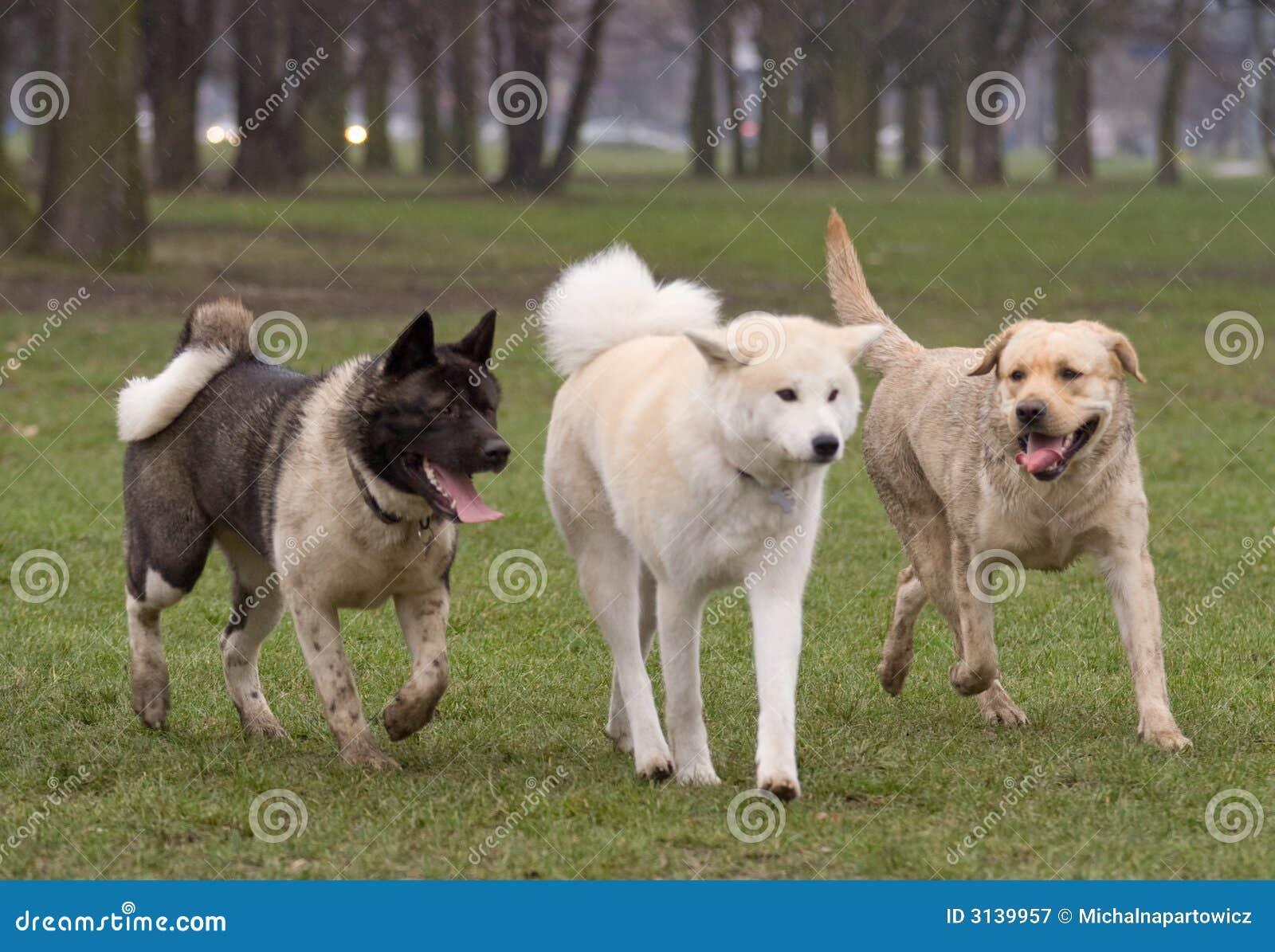 Amico felice dell albero - cani
