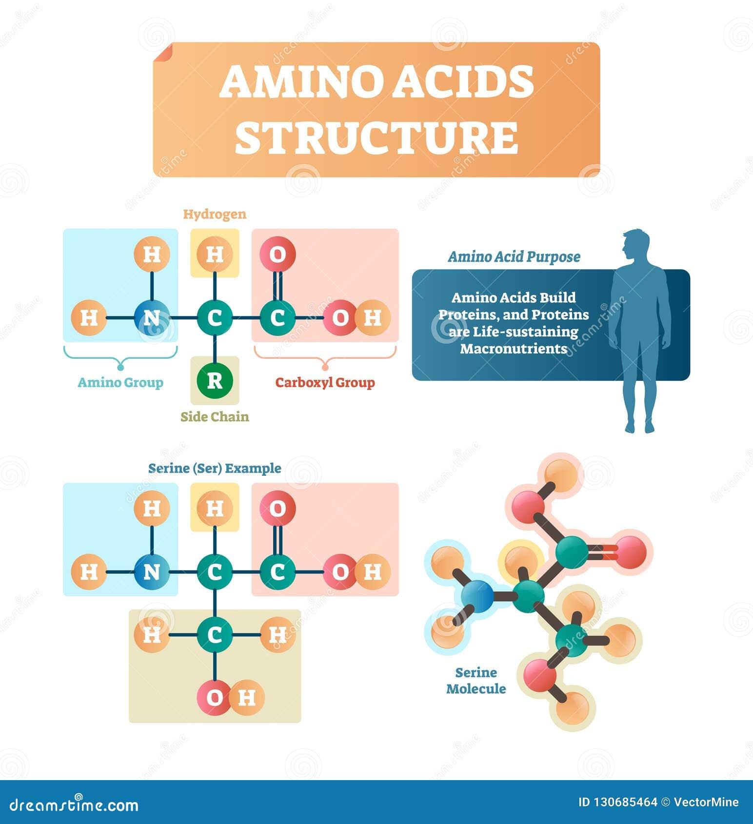Amino kwas struktury wektoru ilustracja Serine molekuły diagram