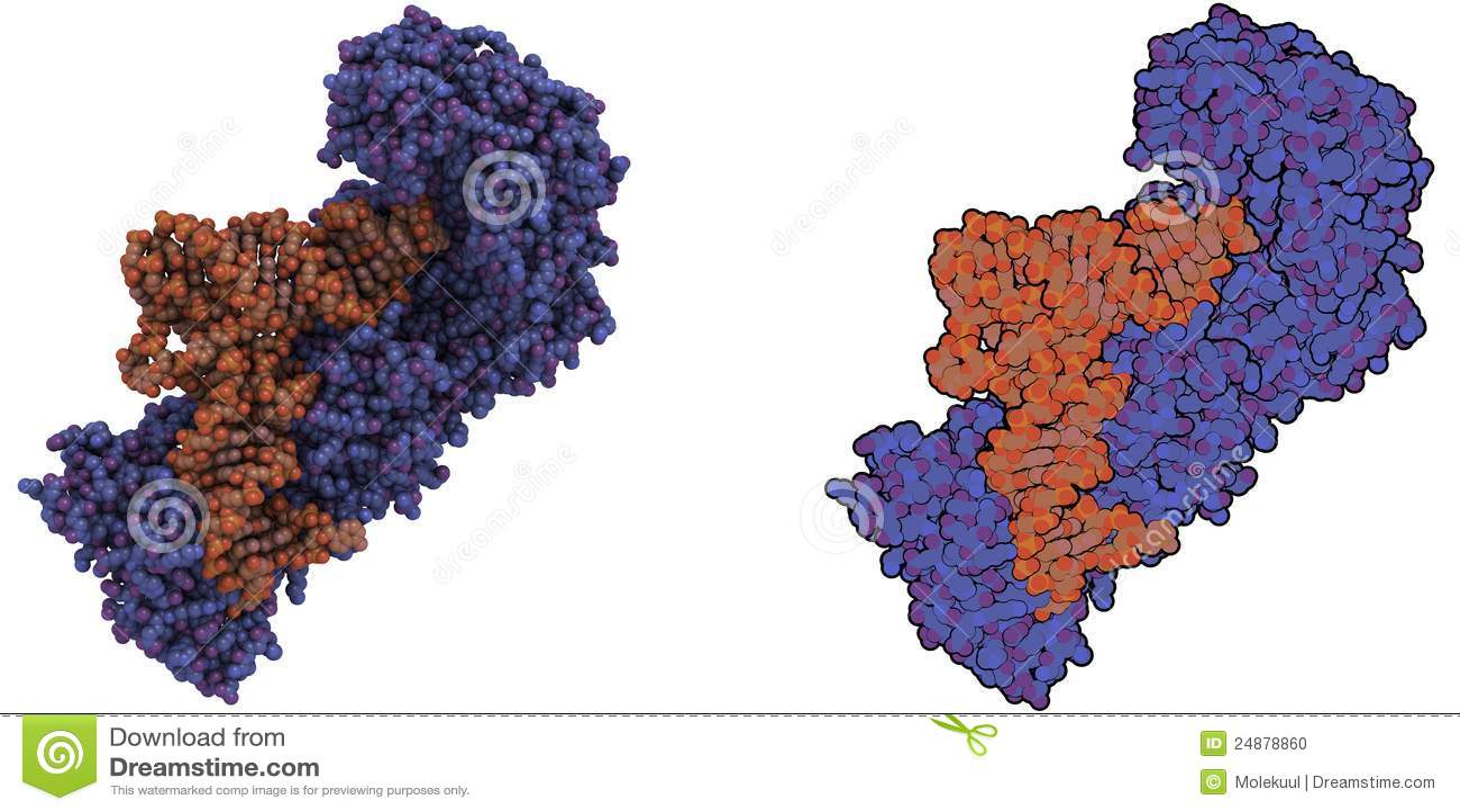 Aminoacyl Trna Synthetase Molecule Stock Photo Image
