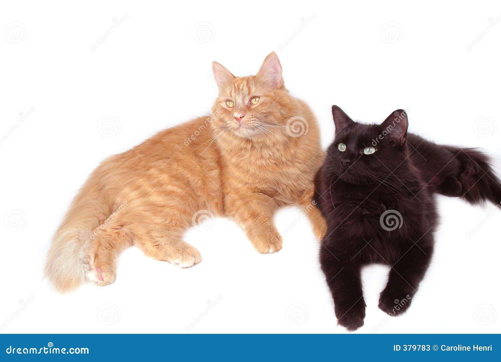 Amis de chat rouge et noir