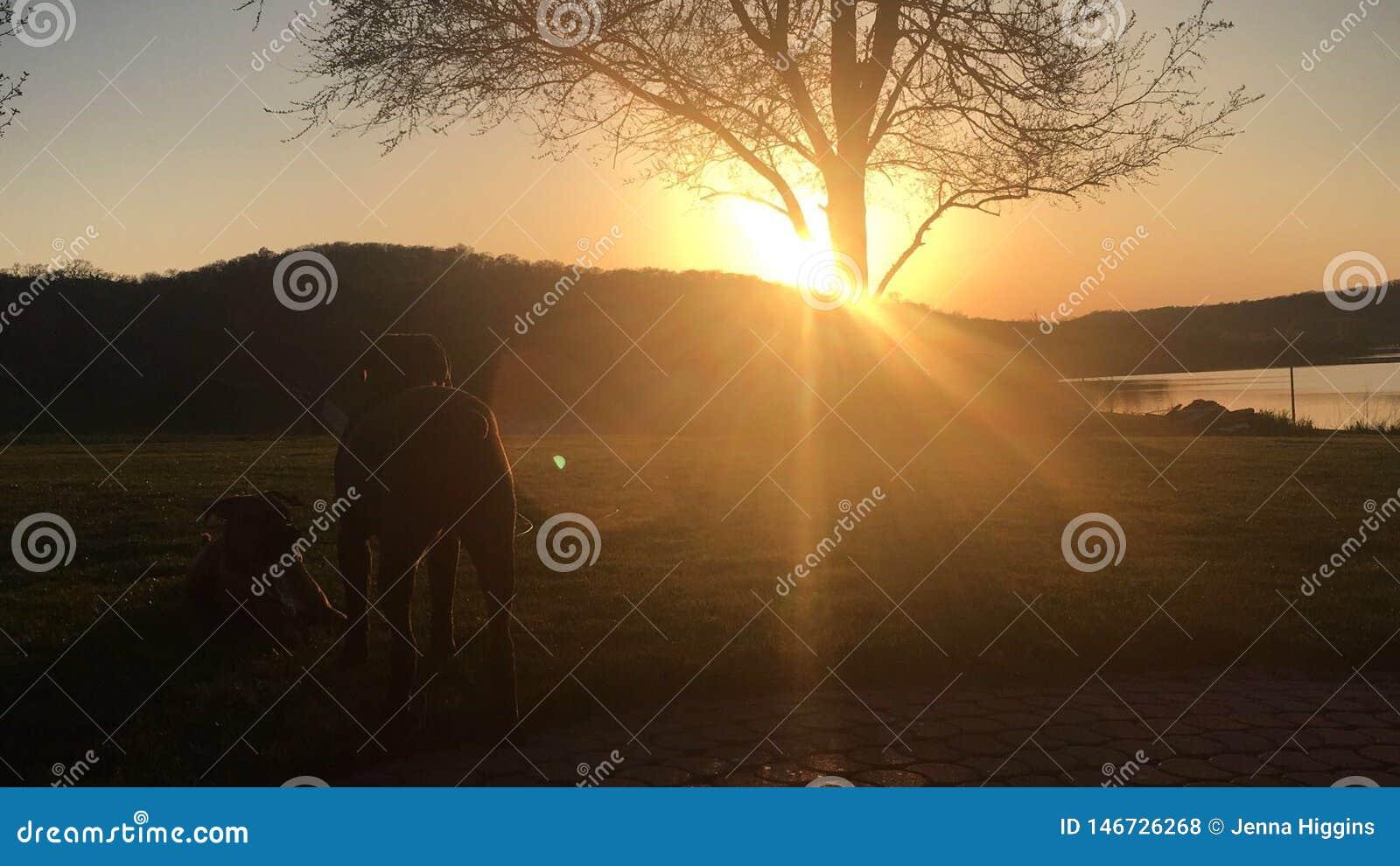 Amis observant le coucher du soleil