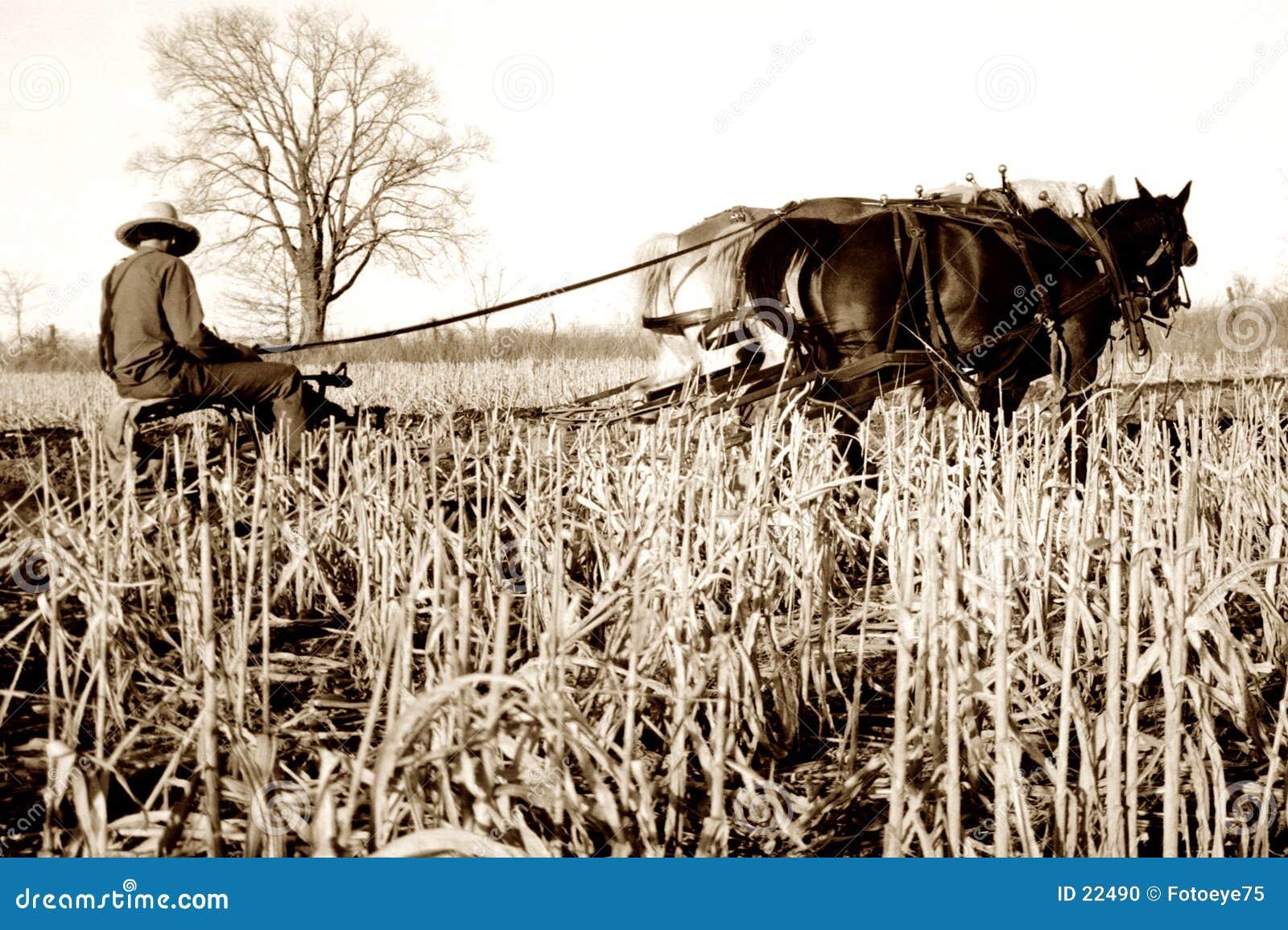 плужок лошадей amish