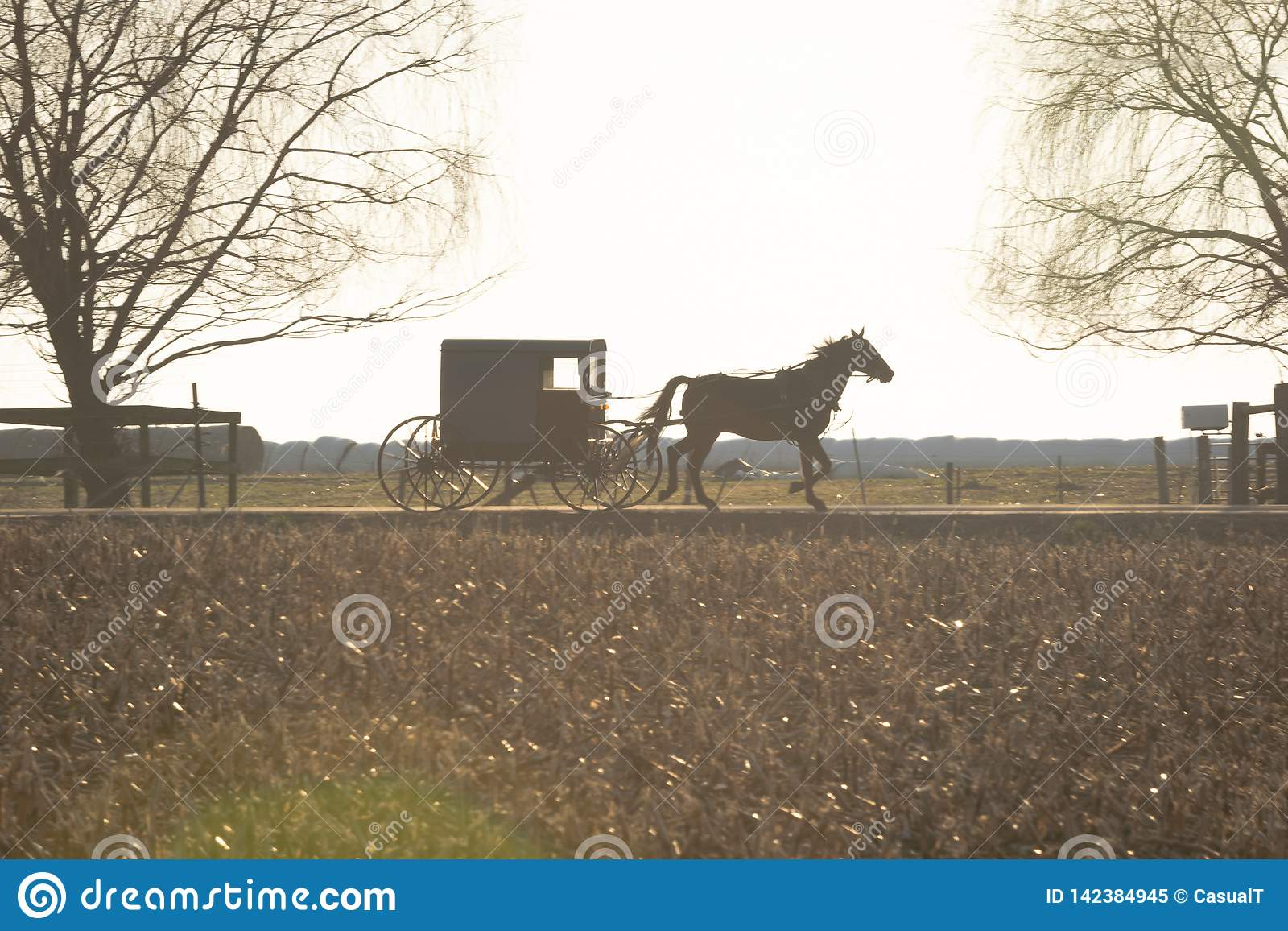 Amish buggy drawn by a trotting horse, Lancaster County, PA