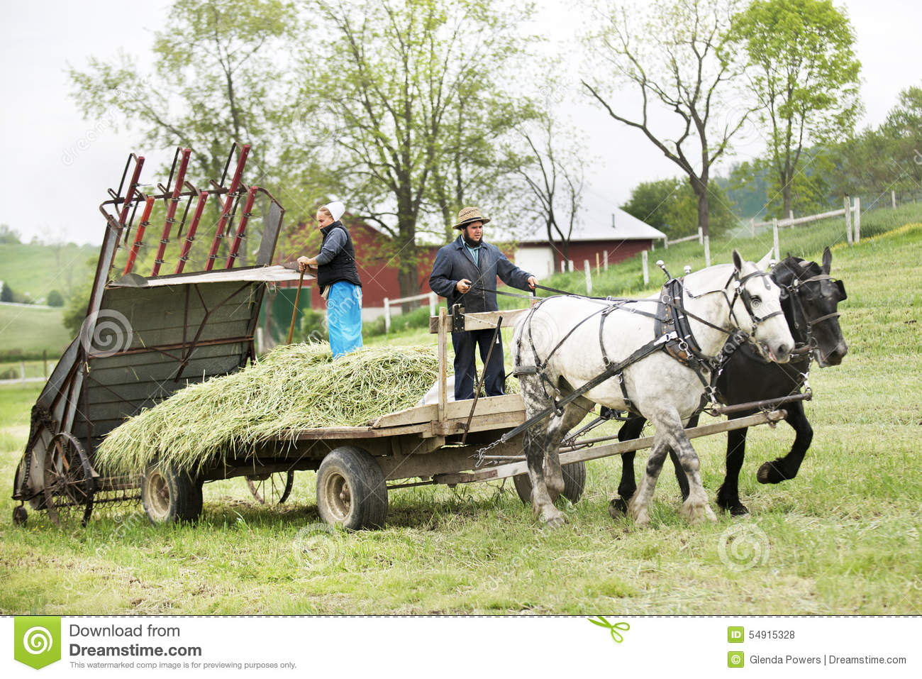 Amish Couple Preparing Their Fields In Spring Editorial