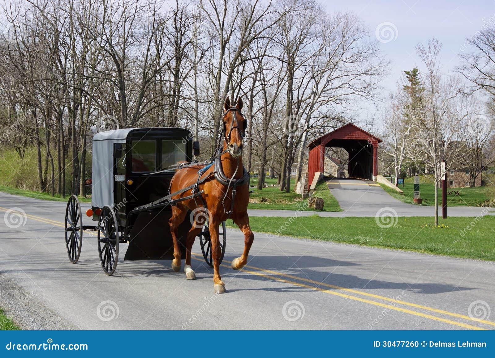 Amish fracht i koń