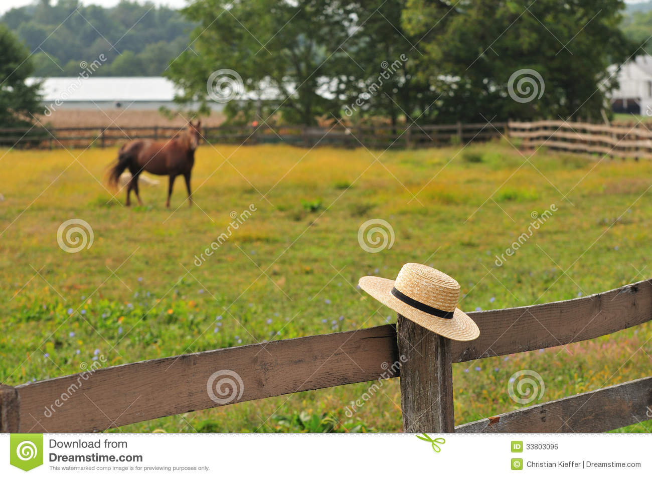 Amish Fence Posts : Amish hat in horse farm royalty free stock image