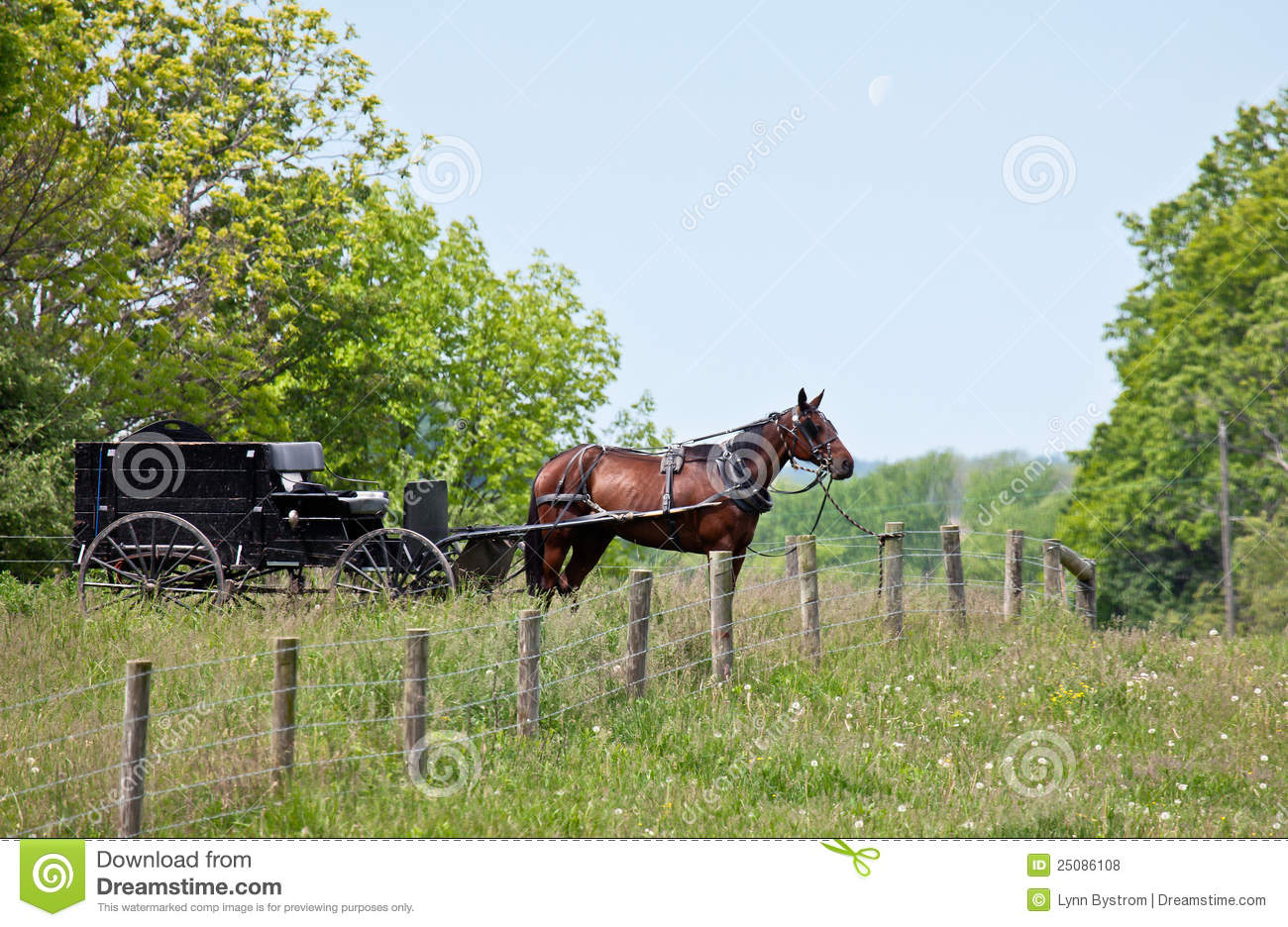 Amish Fence Posts : Amish horse and buggy royalty free stock photos image