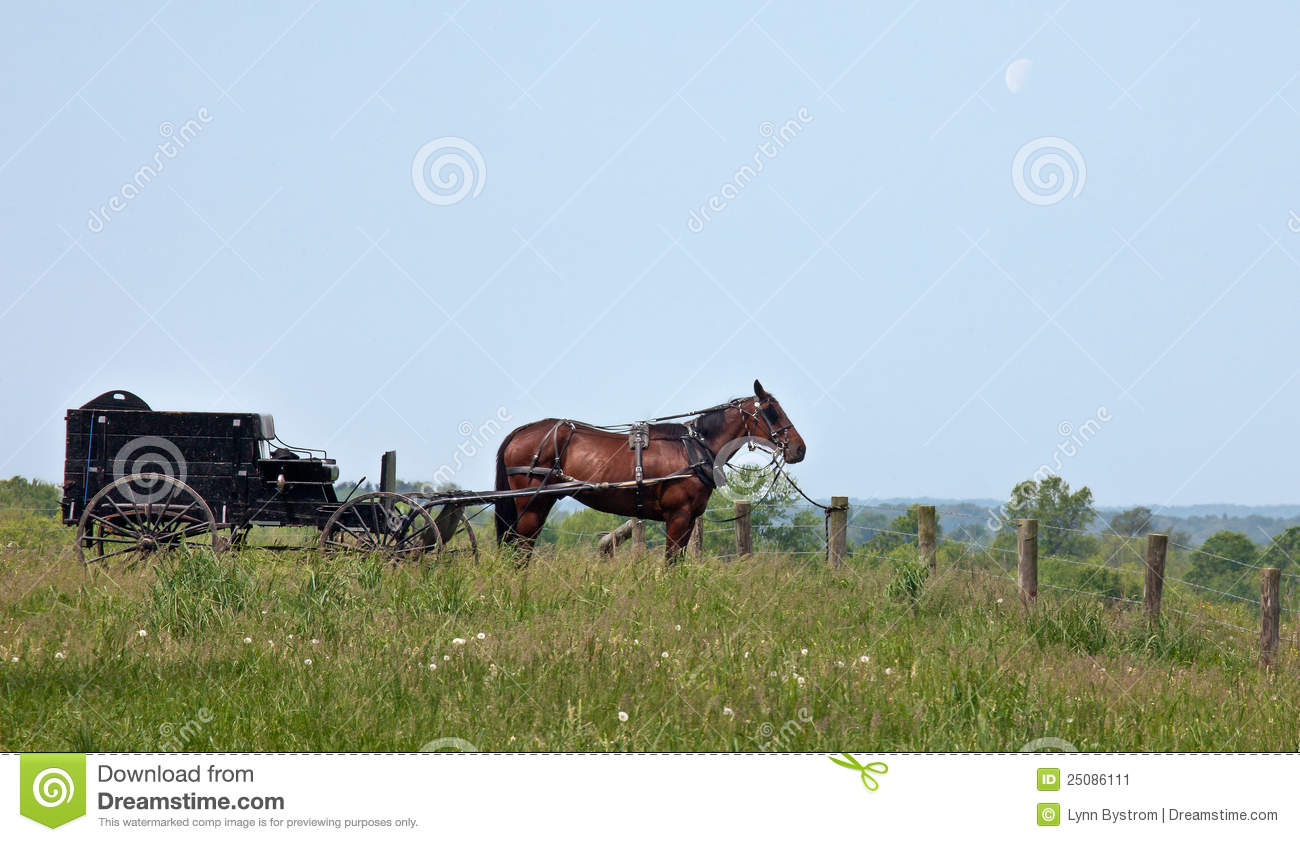Amish Fence Posts : Amish horse and buggy stock image