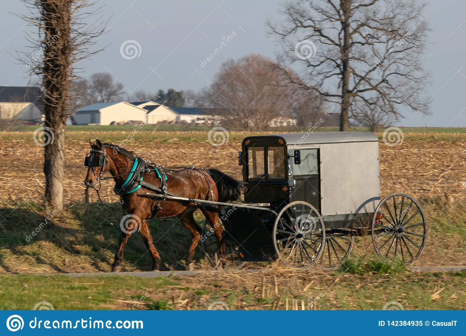 Amish horse buggy drawn by a beautiful brown horse, Lancaster County, PA