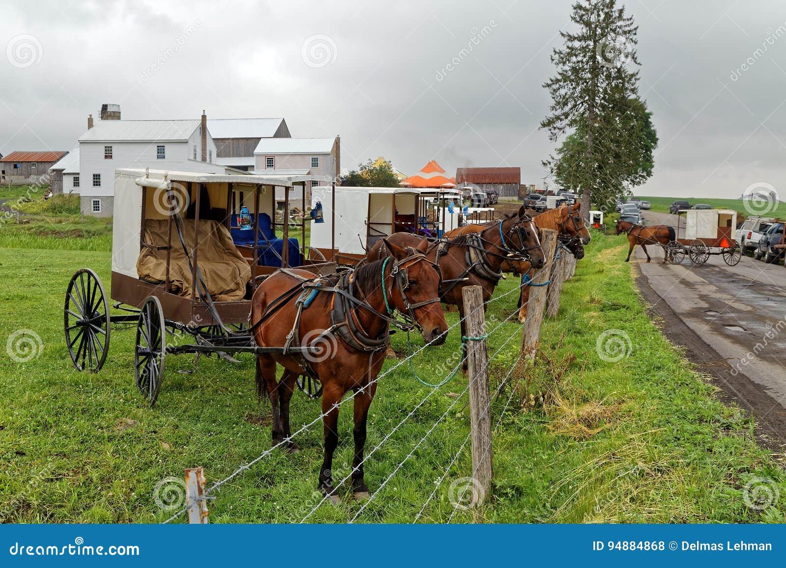 Amish korzyści aukcja w Pennsylwania