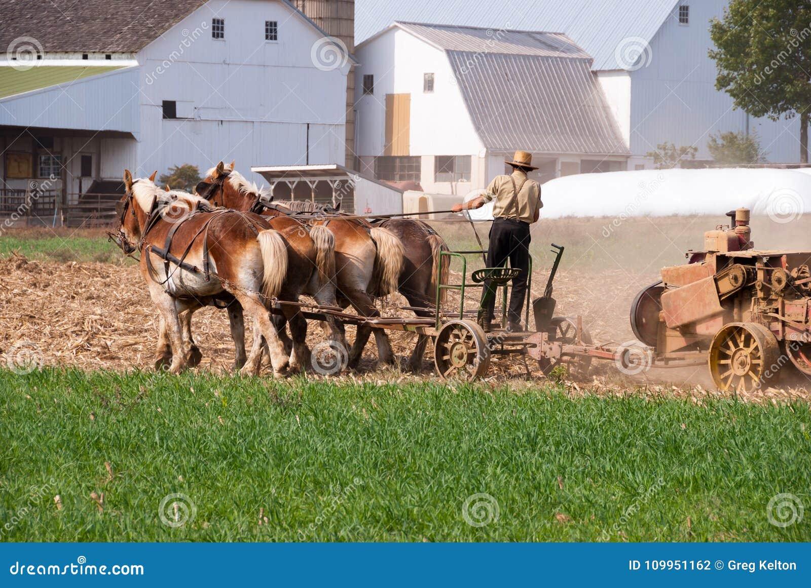 Amish mężczyzna działania pole