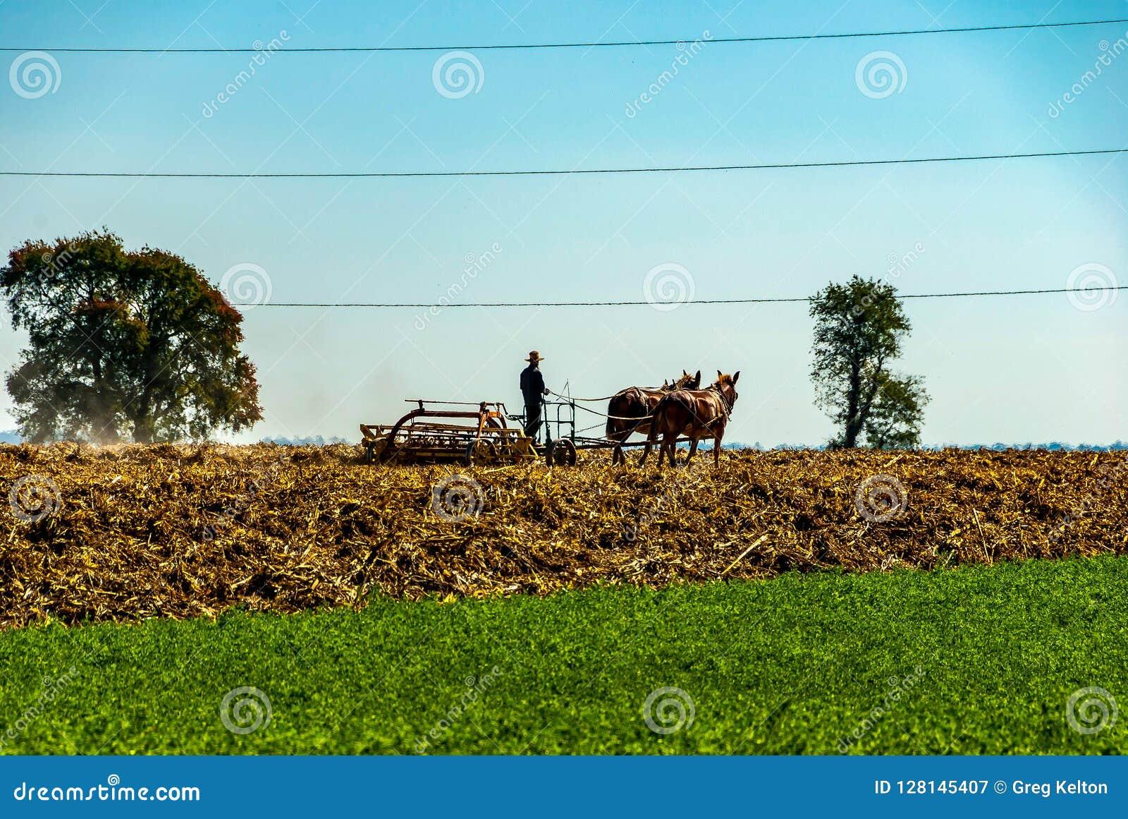 Amish rolnik Orze pola