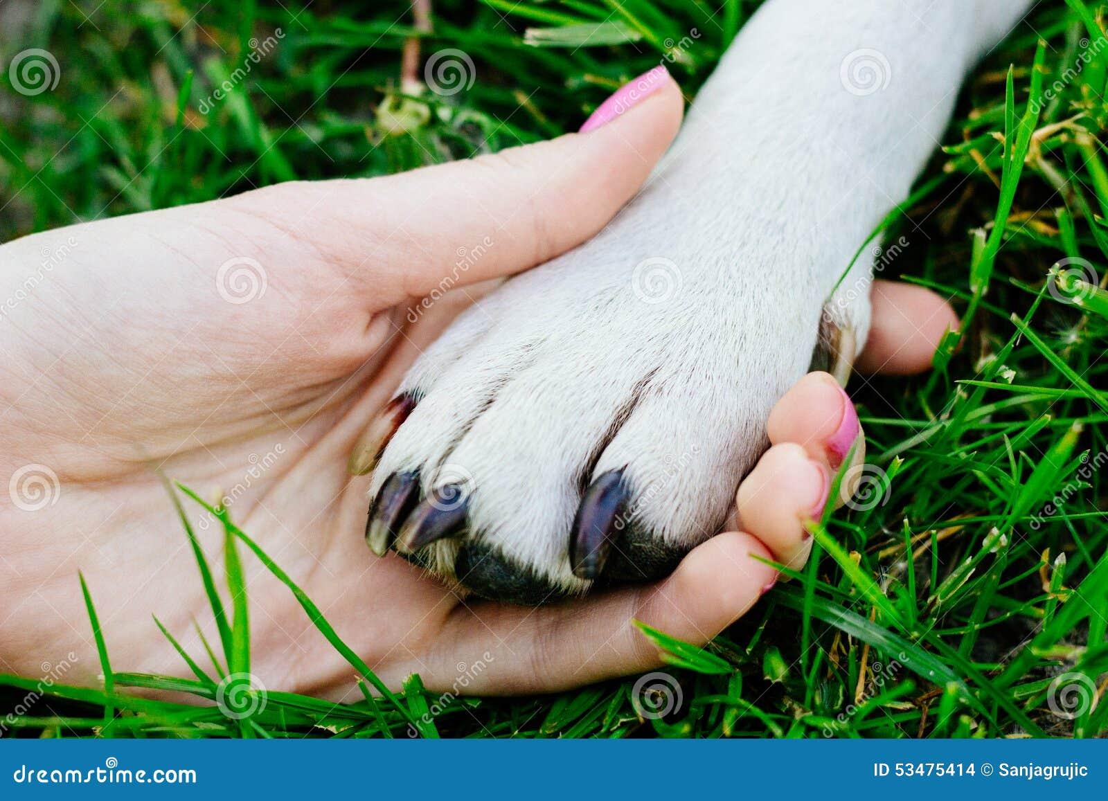amizade entre o ser humano e o animal foto de stock imagem de