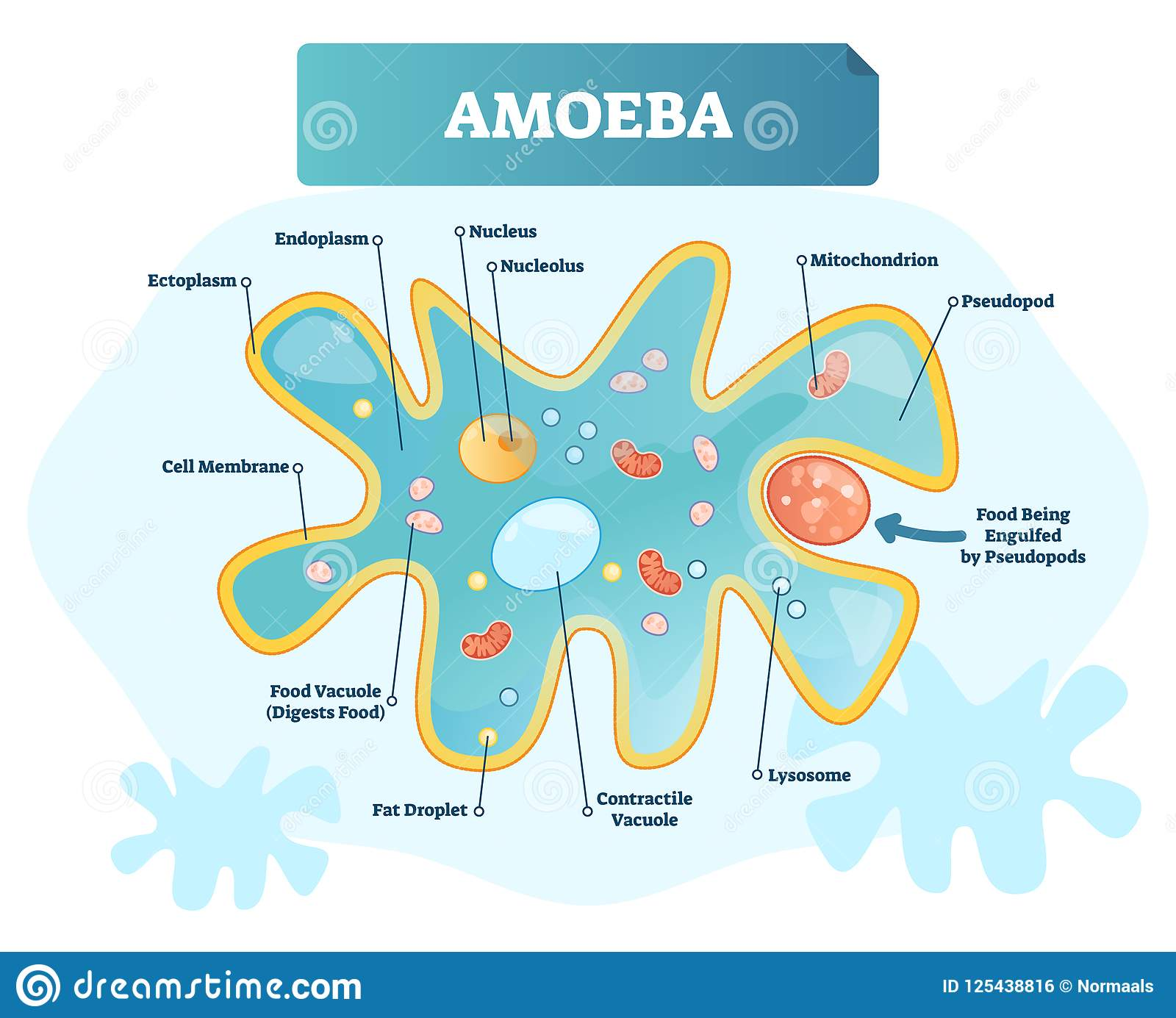 Amoeba Cartoons  Illustrations  U0026 Vector Stock Images