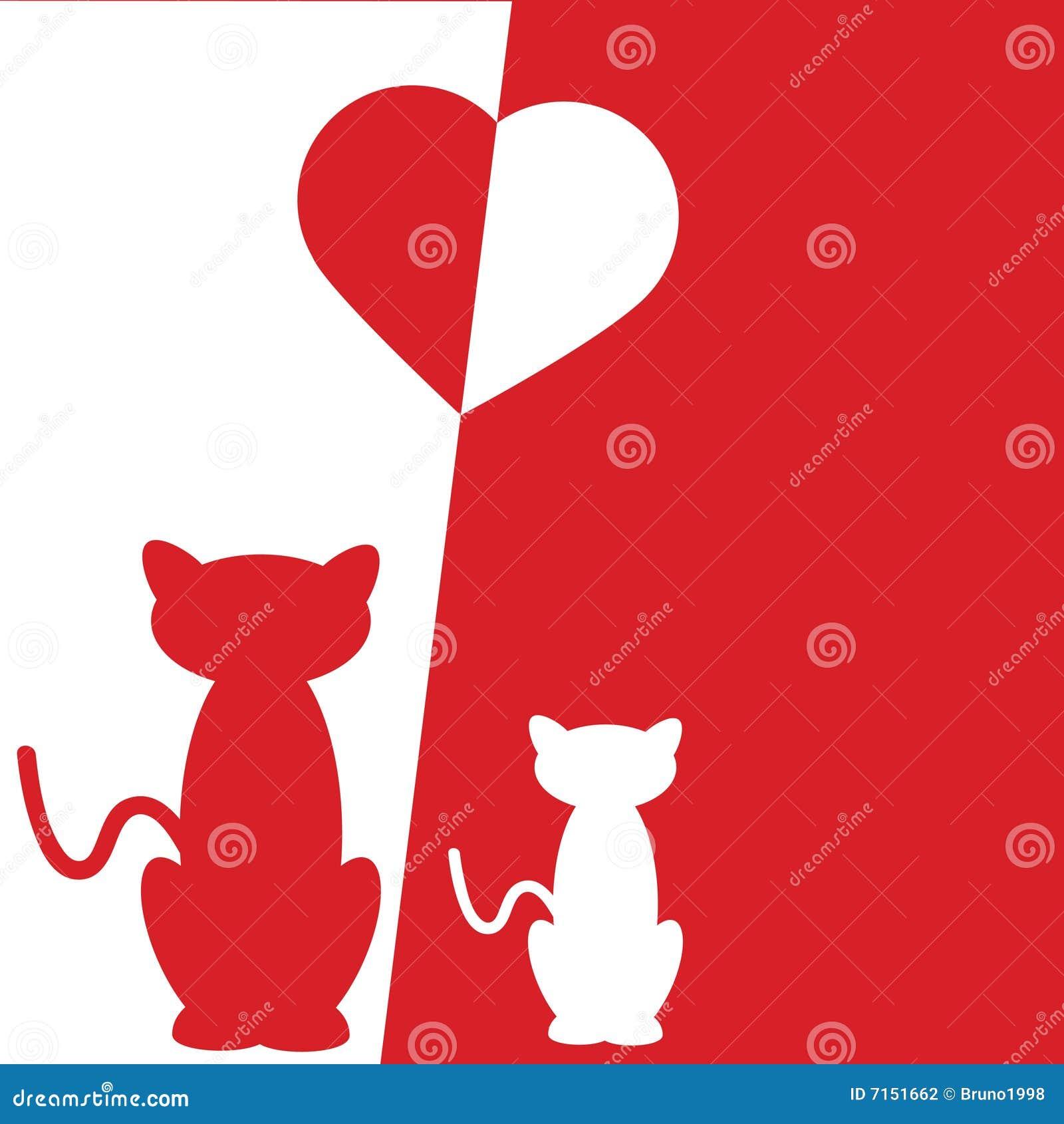 Amor del gato
