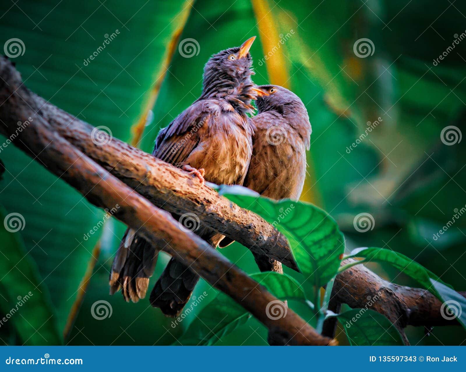 Amor del pájaro