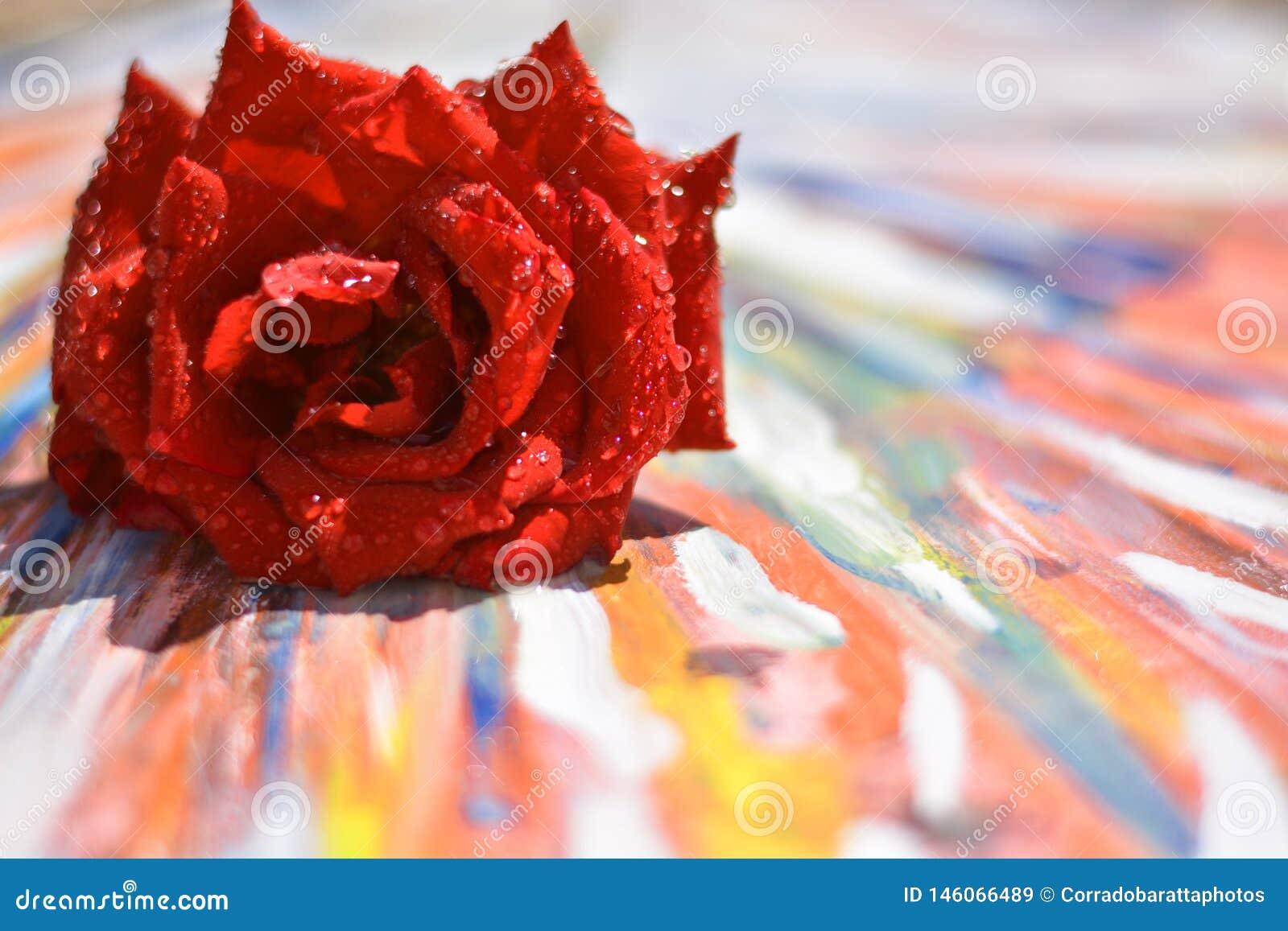 Amor, está viviendo con colores brillantes