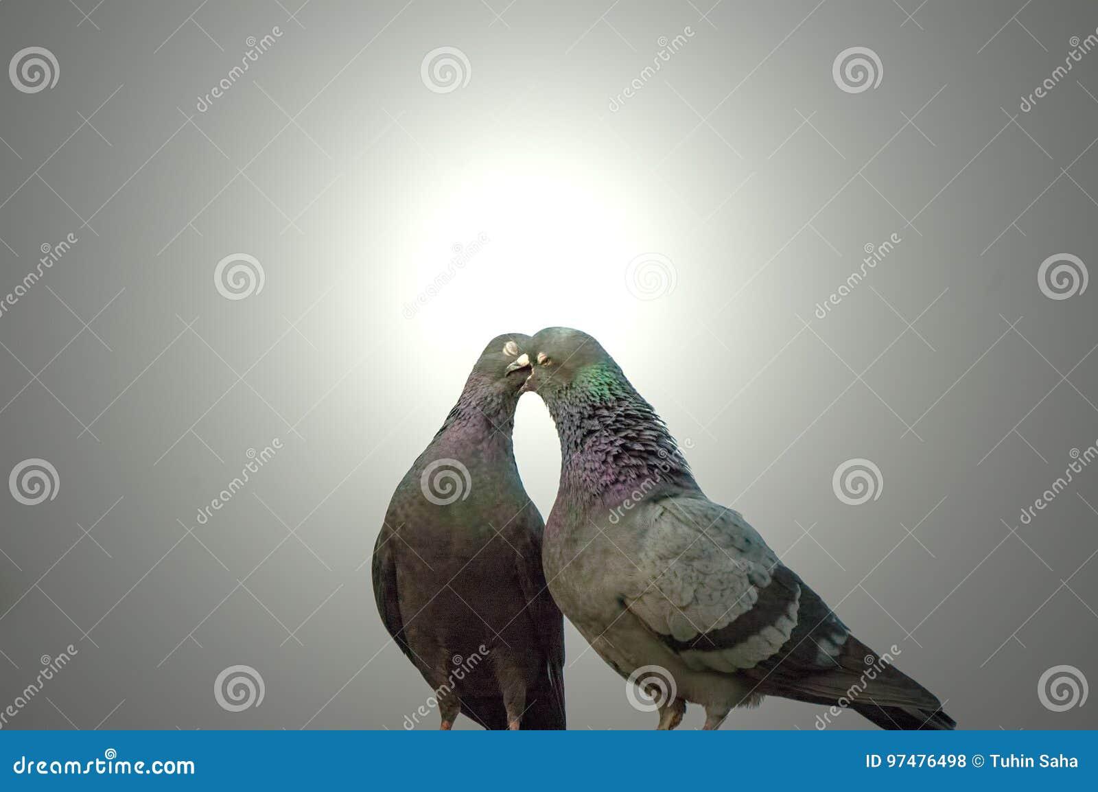 Como hacen el amor las palomas [PUNIQRANDLINE-(au-dating-names.txt) 40