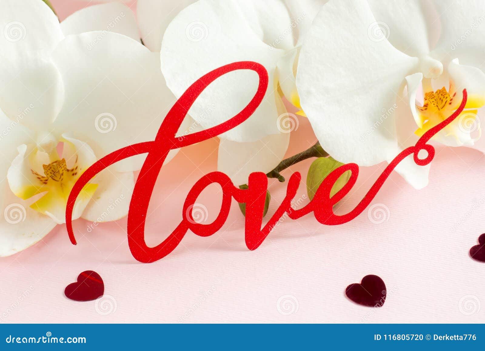 Amore bianco dell iscrizione dell orchidea su un fondo rosa