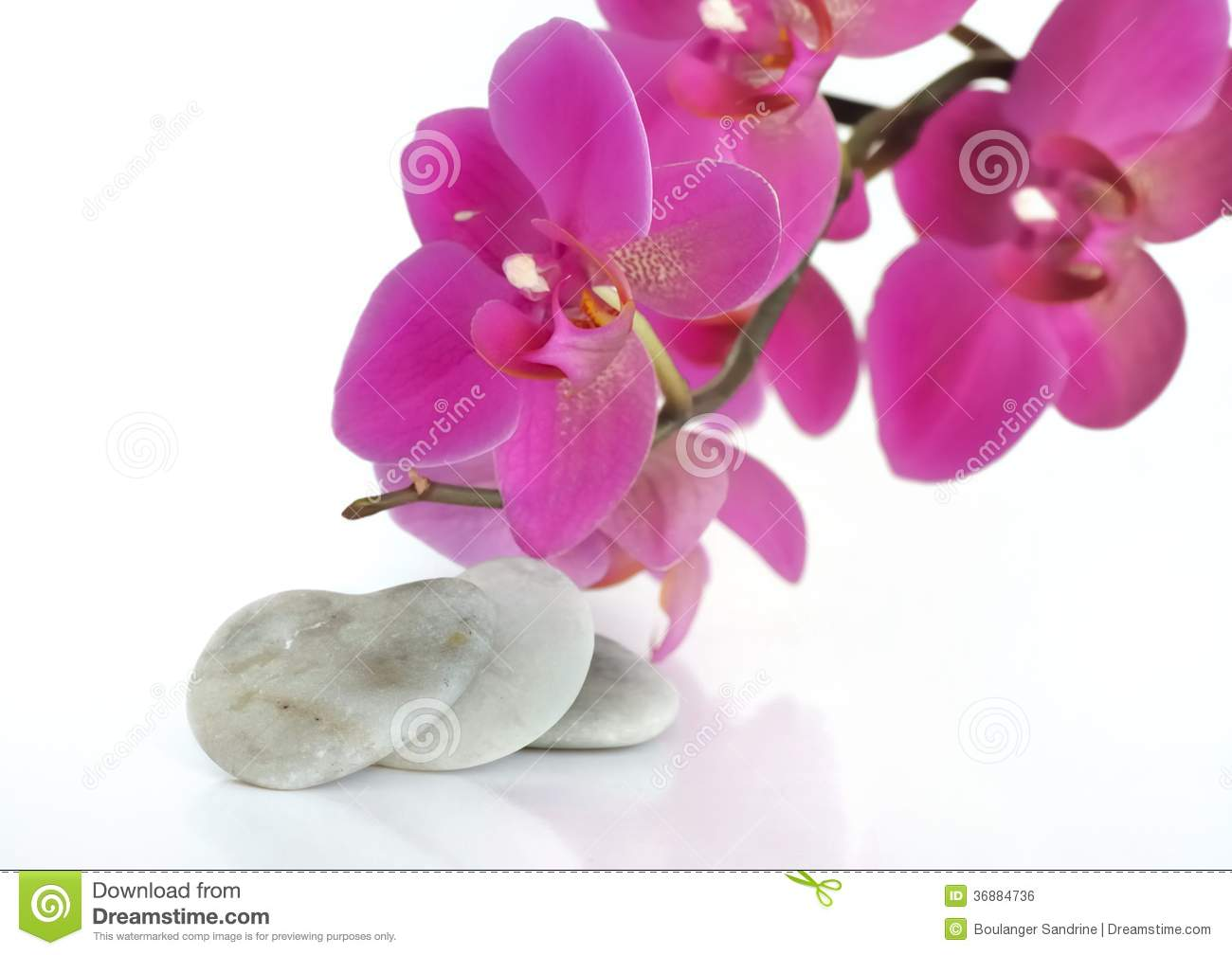 Download Amore con l'orchidea fotografia stock. Immagine di background - 36884736