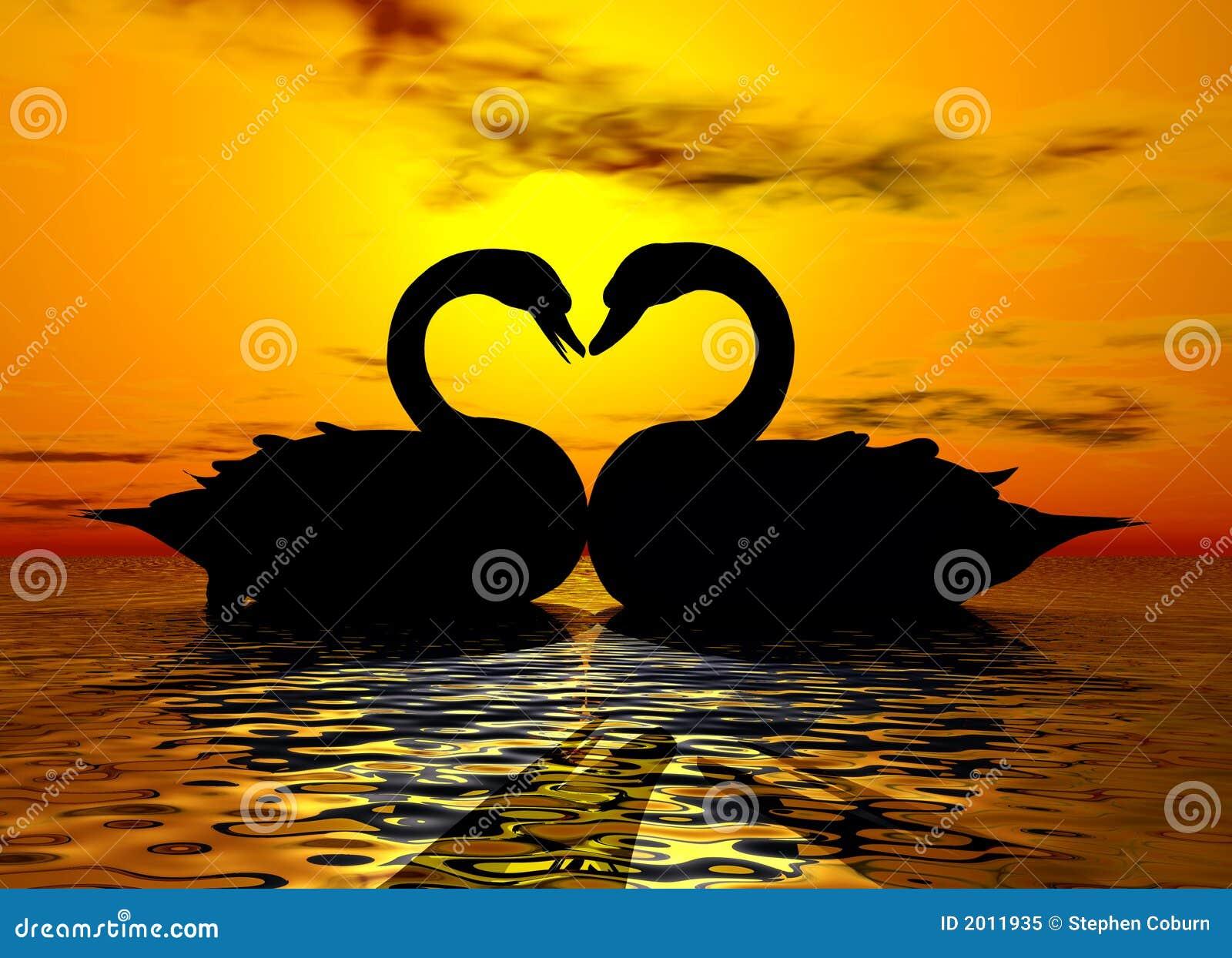 Amour de cygne dans le coucher du soleil