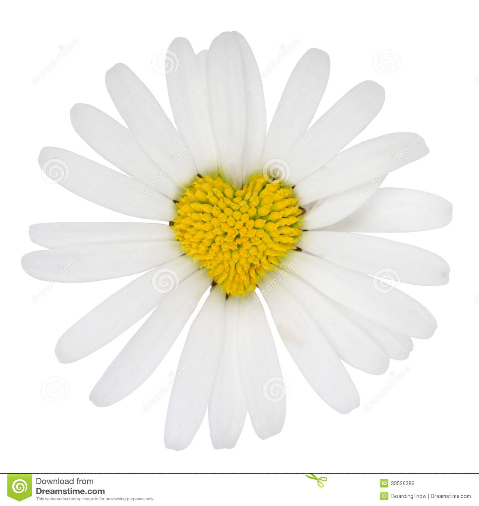 Amour en forme de coeur de fleur de marguerite des pr s - Image fleur marguerite ...