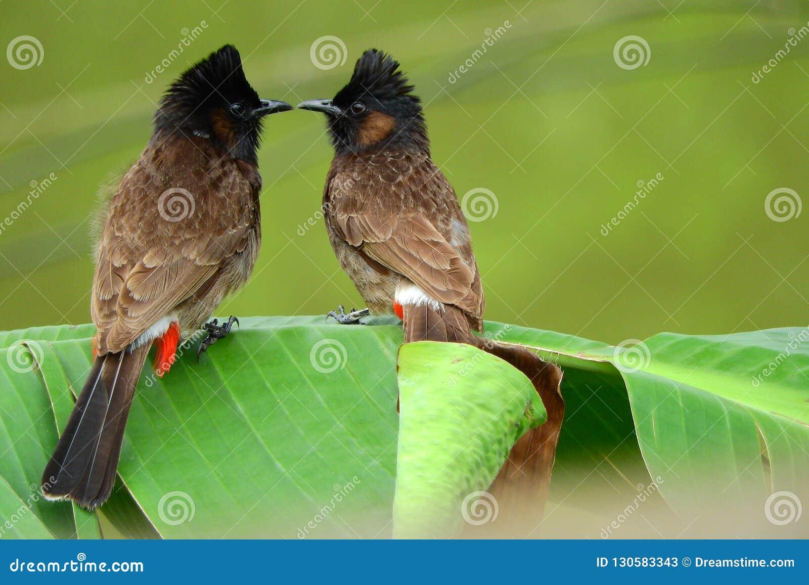 Amour faisant des oiseaux