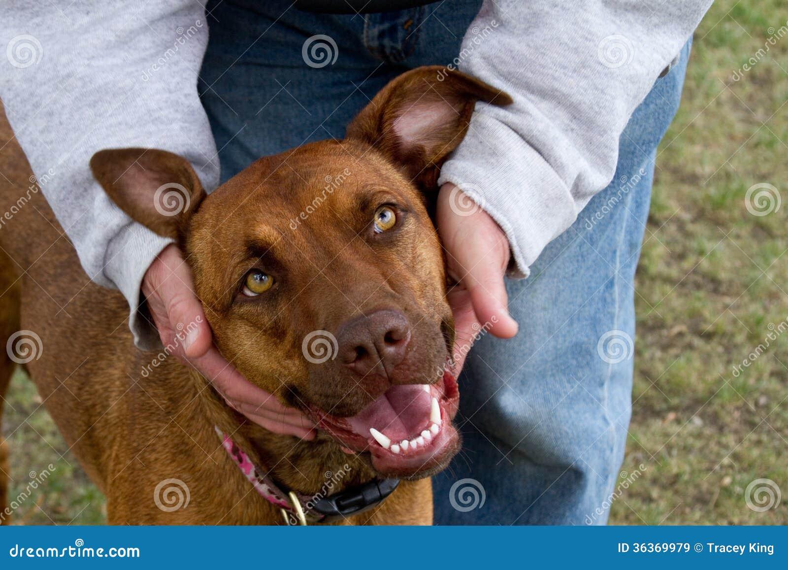 Amour heureux de chien
