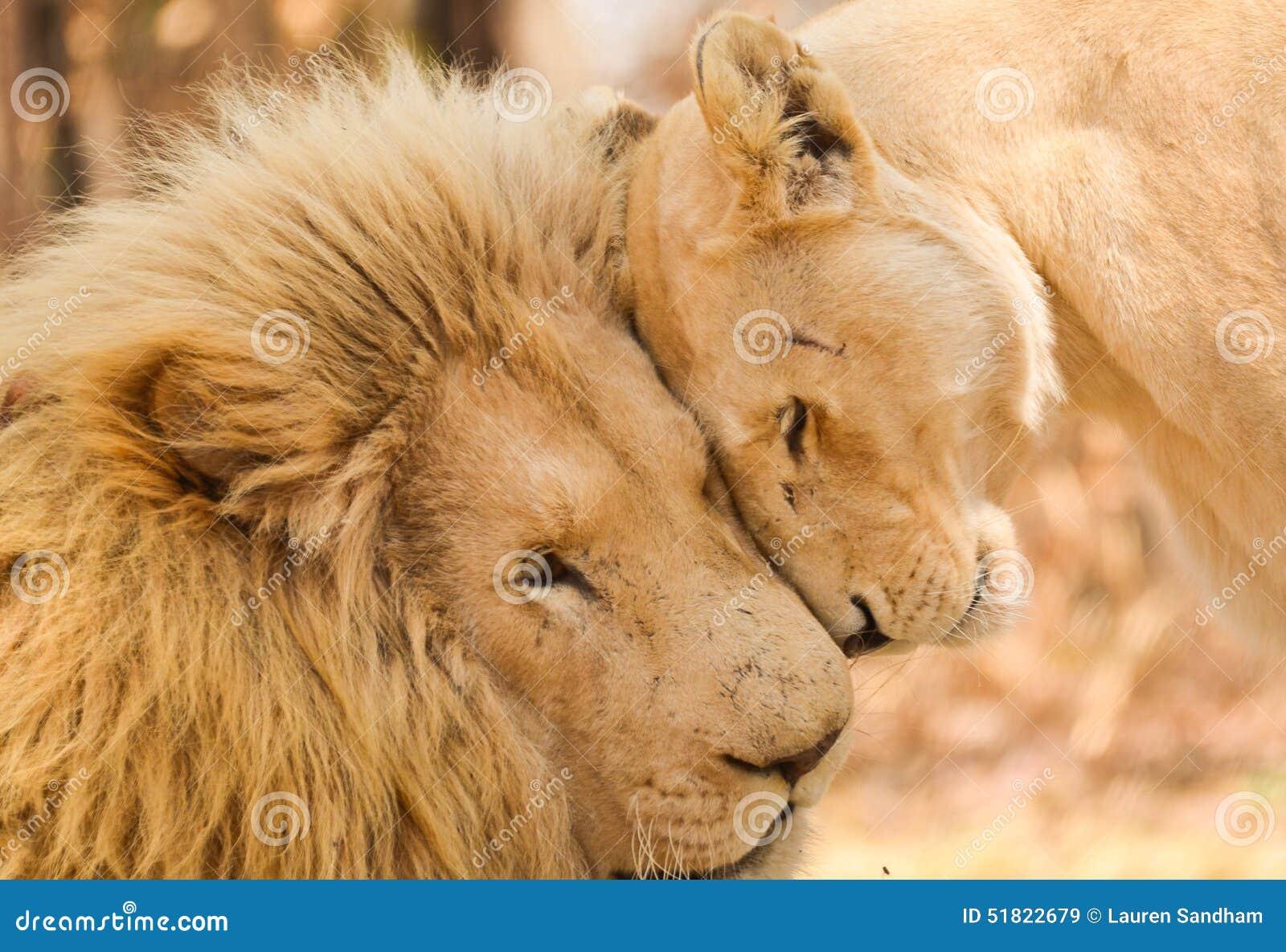 Amour majestueux