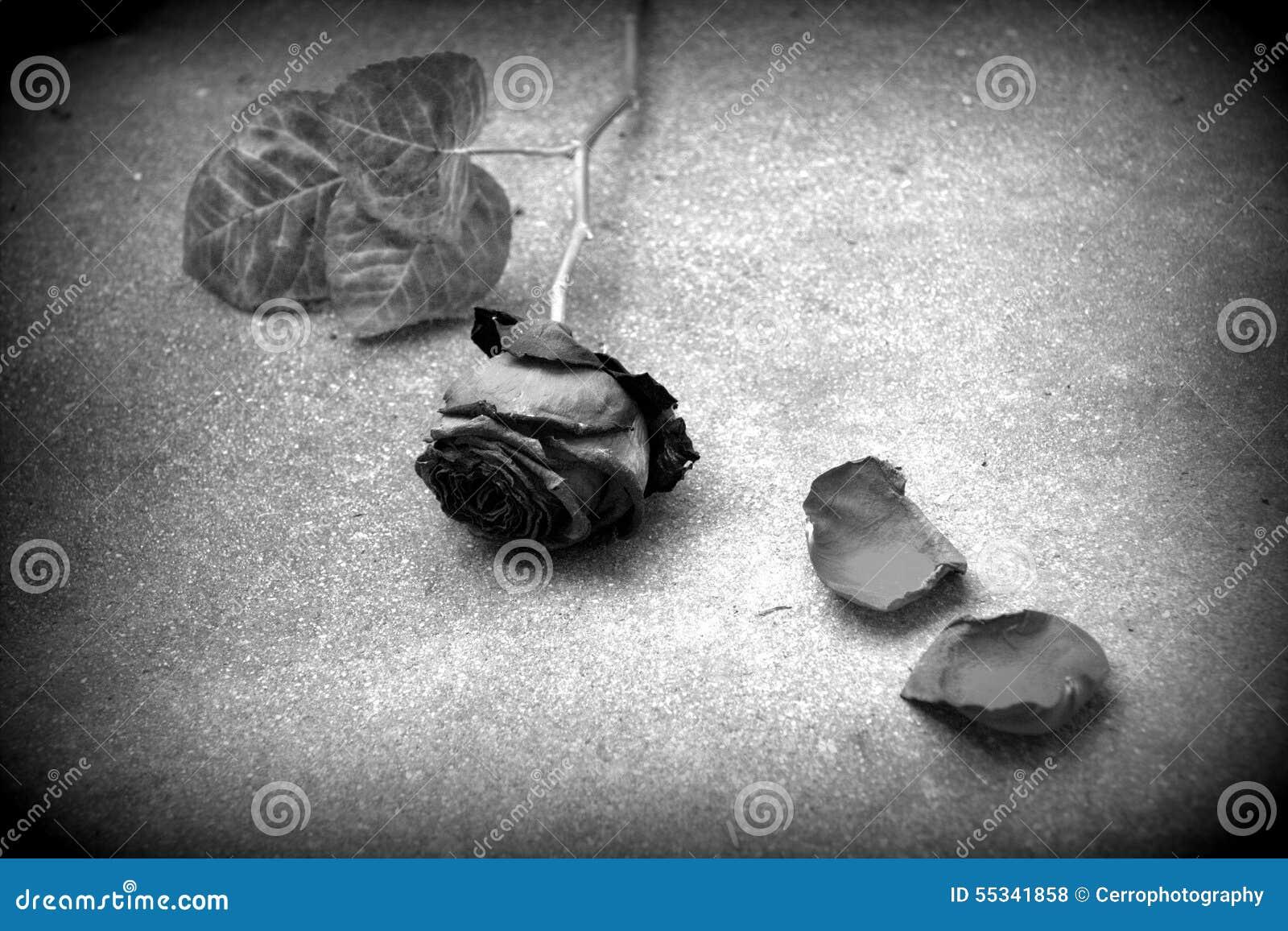 amour perdu noir et blanc photo stock image du loisirs 55341858. Black Bedroom Furniture Sets. Home Design Ideas