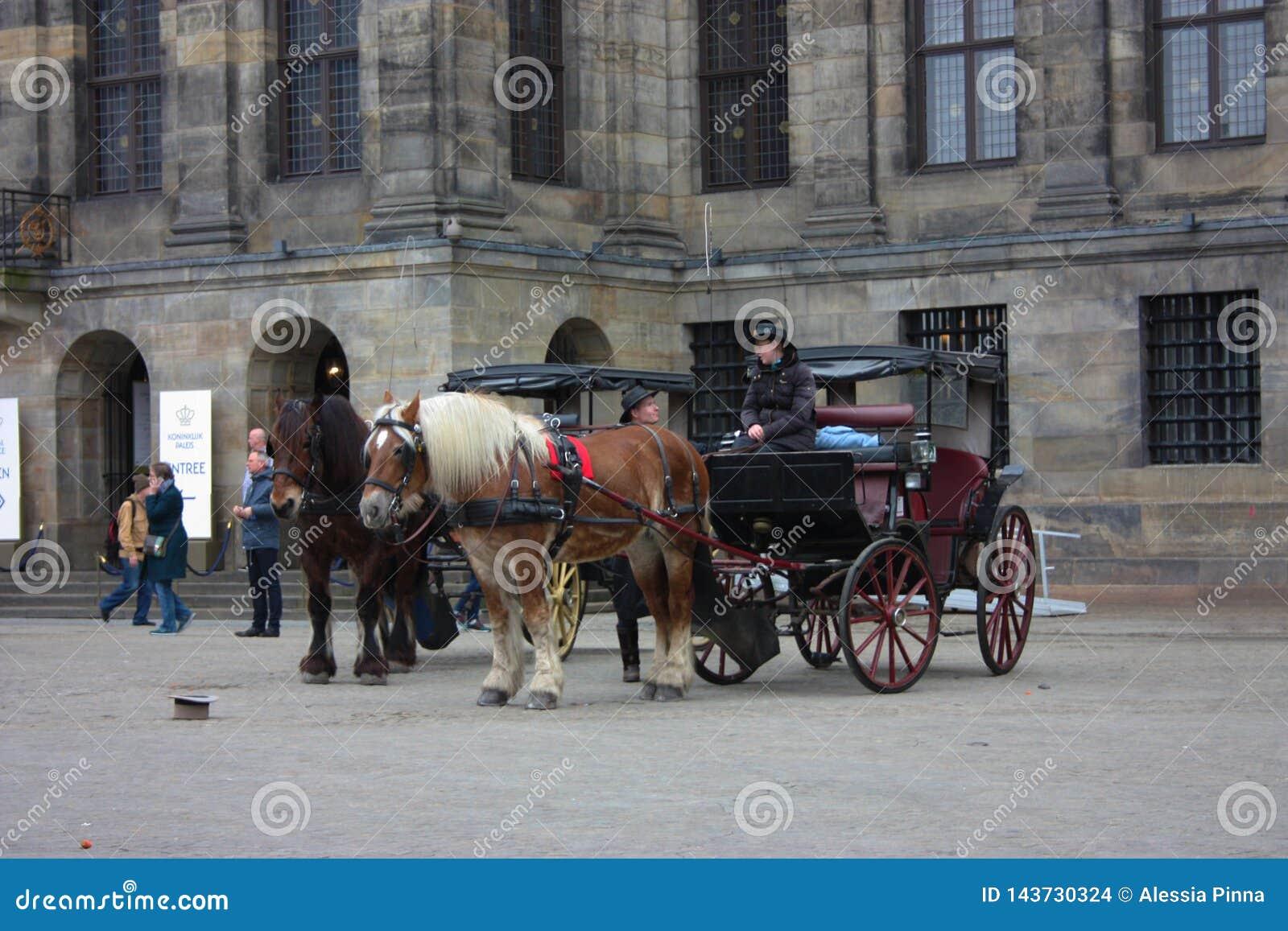 Amsterdam, destino turístico internacional Dos caballos tiran de un carro y el cochero charla con un amigo que él se encontró por